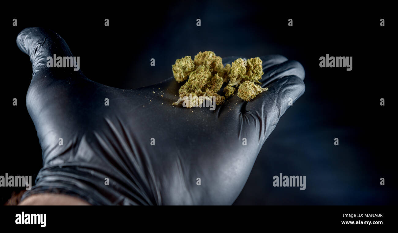 A hand with a black latex glove holding a handful of fresh nugs.. Black background - Stock Image
