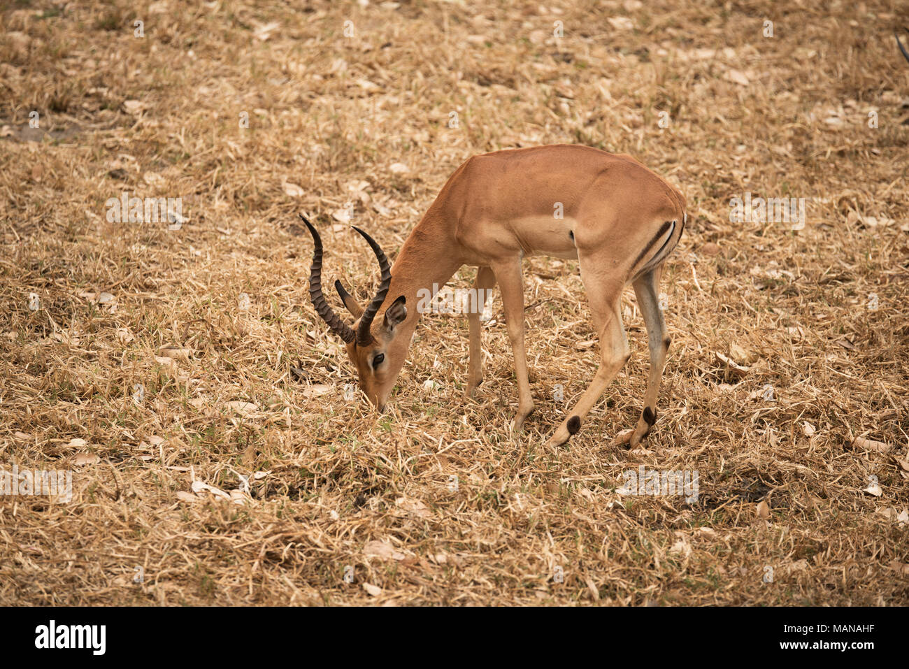 Game Feeder Stock Photos Amp Game Feeder Stock Images Alamy