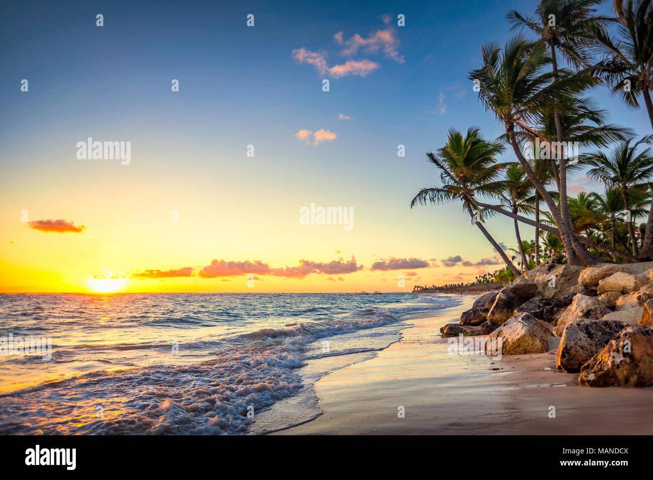 Palm trees on the tropical beach, Bavaro, Punta Cana, Dominican Republic - Stock Image