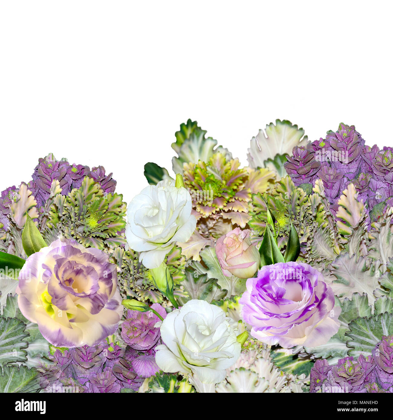 Floral border with bouquet of purple with white Eustoma (Lisianthus) flowers and ornamental cabbage - Brassica, or flowering kale isolated on a white  - Stock Image