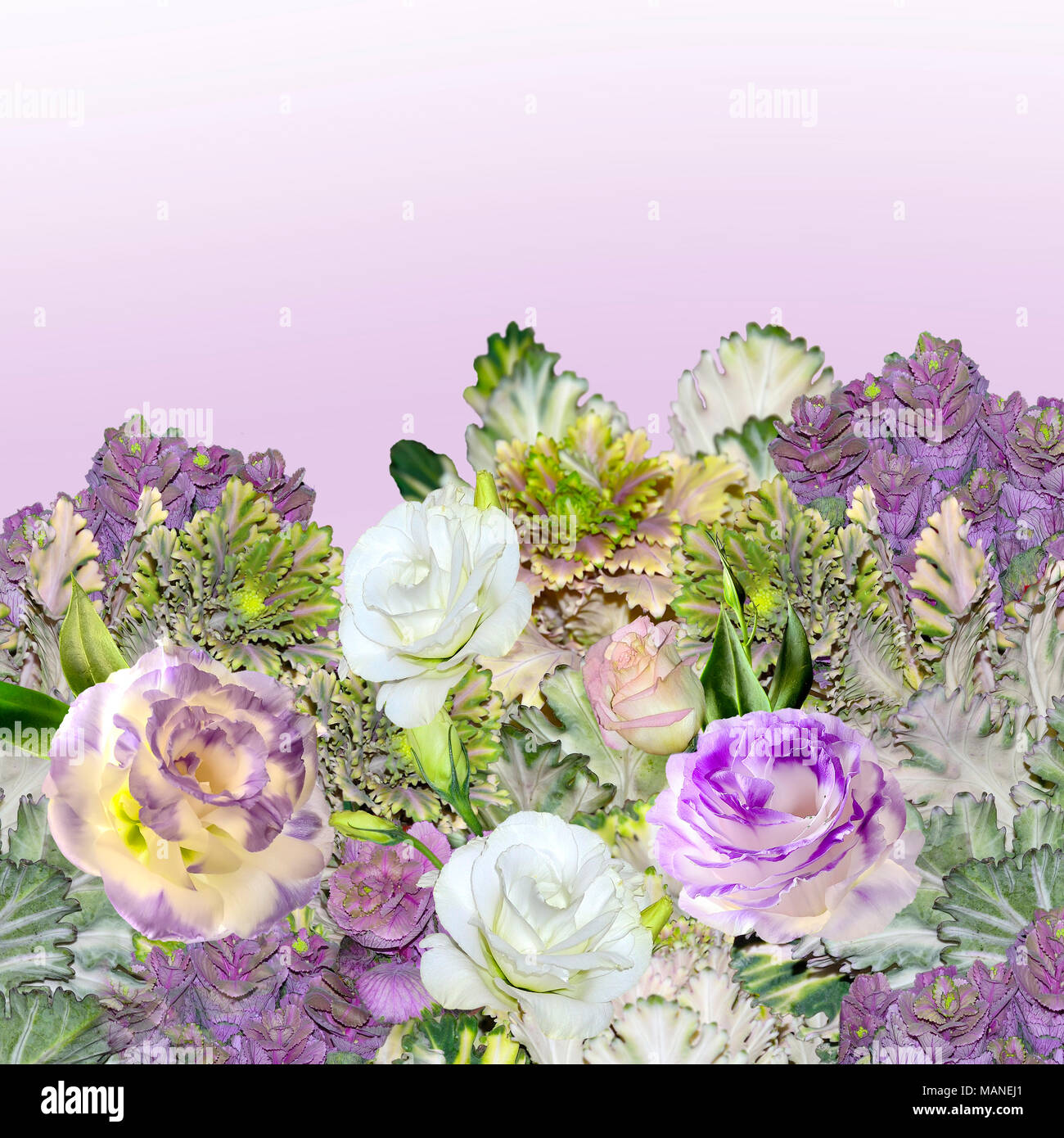 Floral border with bouquet of purple with white Eustoma (Lisianthus) flowers and ornamental cabbage - Brassica, or flowering kale as festive or floris - Stock Image