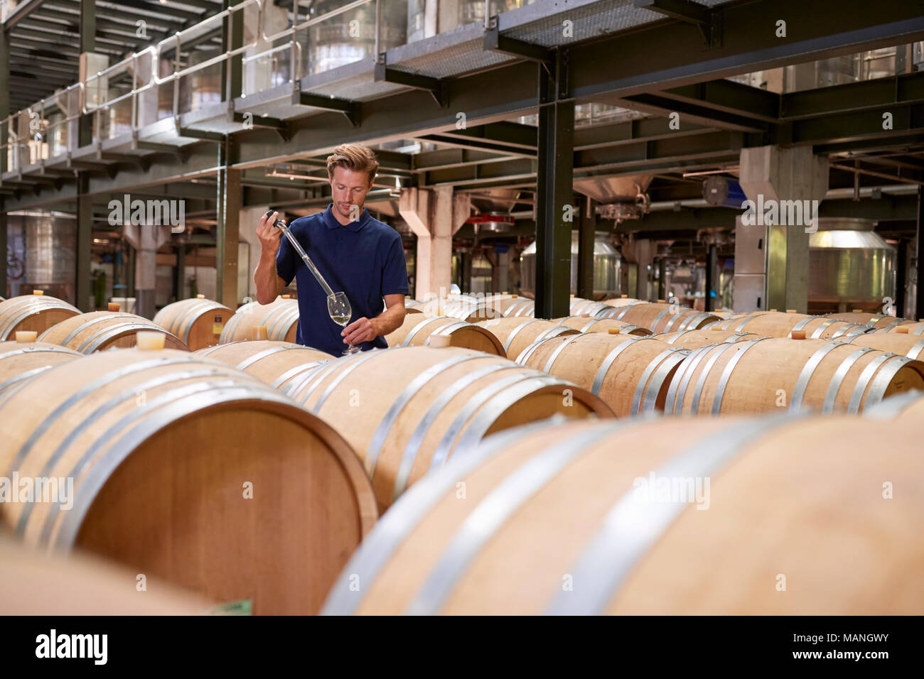 Young man testing wine in a wine factory warehouse - Stock Image