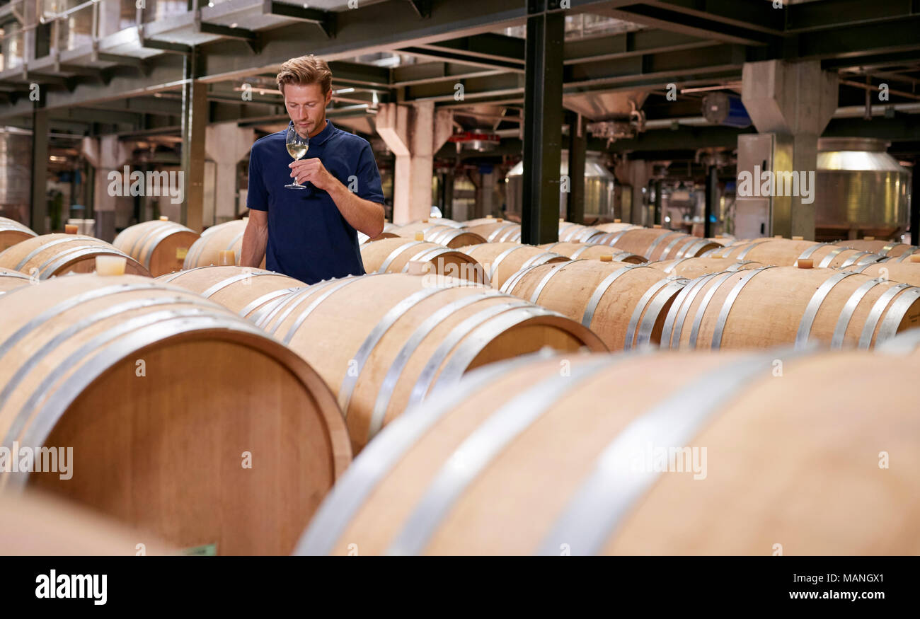 Young man wine tasting in a wine factory warehouse - Stock Image