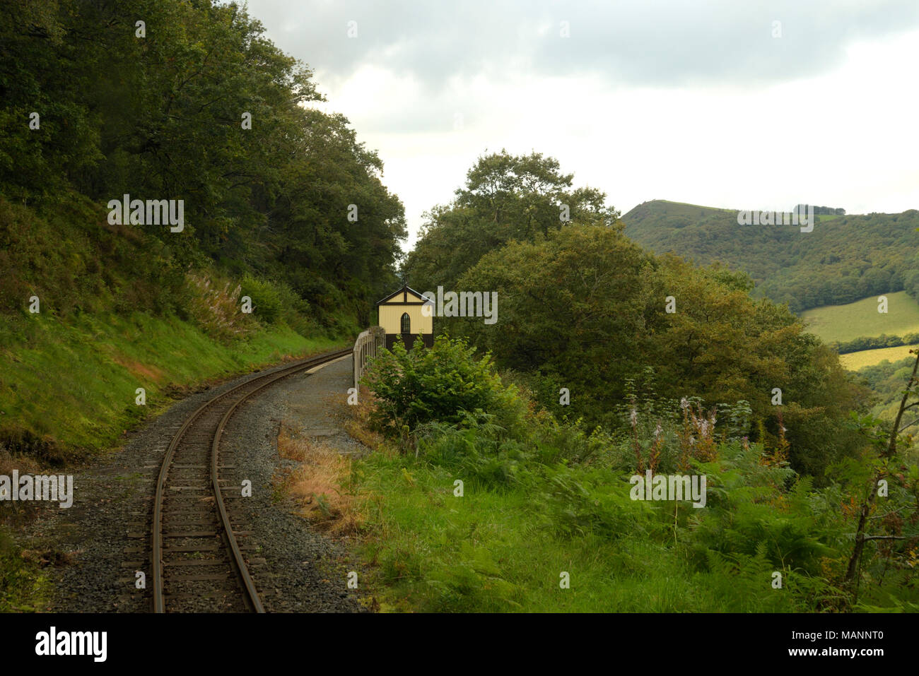 Rheidol Valley Railway, passing Rhiwfron Halt - Stock Image