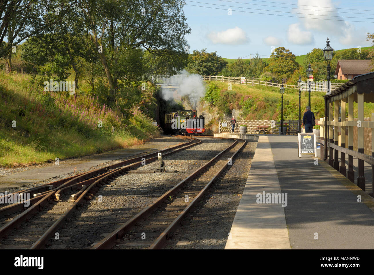 Great Western Engine approaches Devil's Bridge Station on the Vale of Rheidol Railway - Stock Image