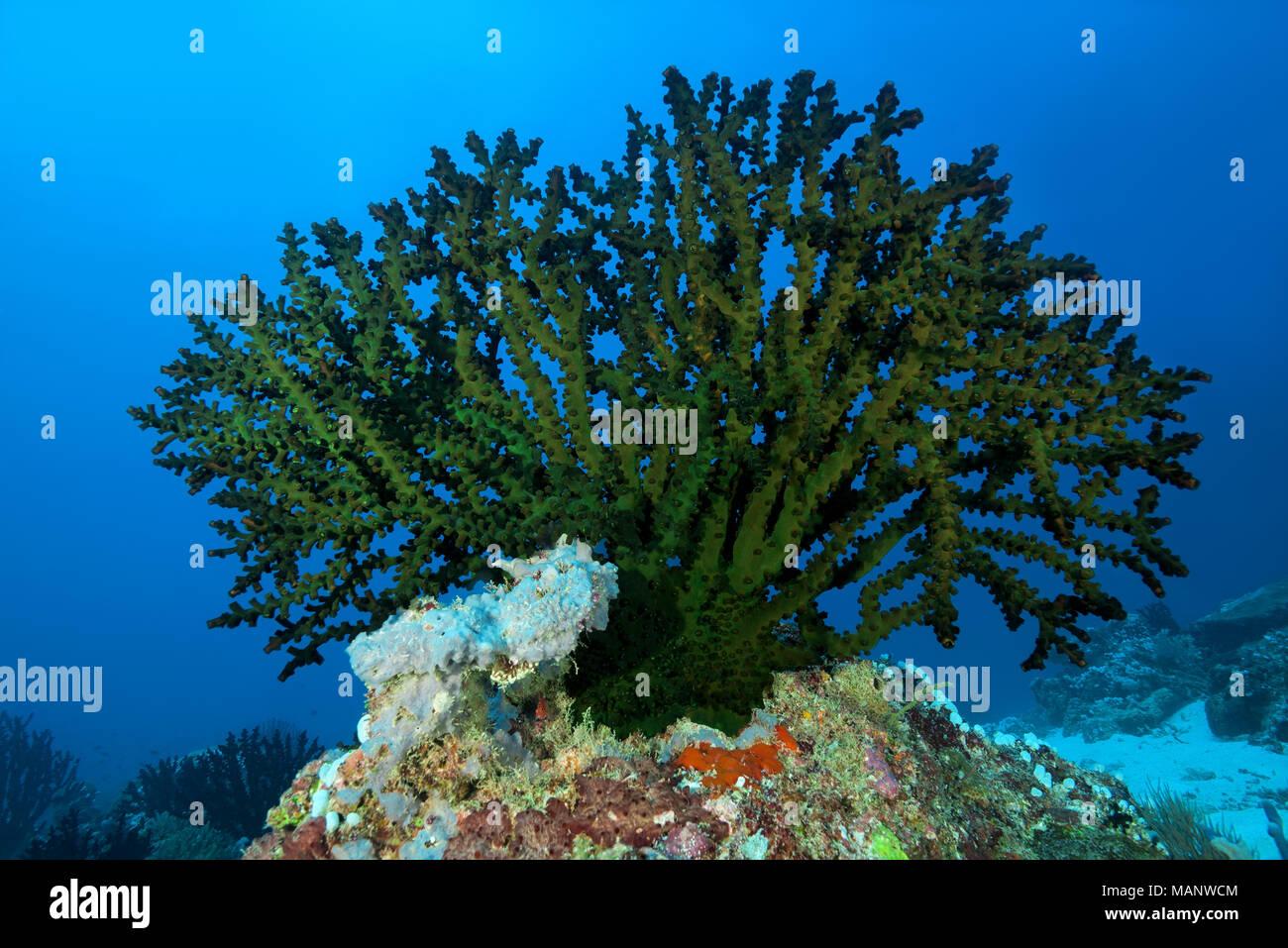 Single Turret Stock Photos & Single Turret Stock Images - Alamy