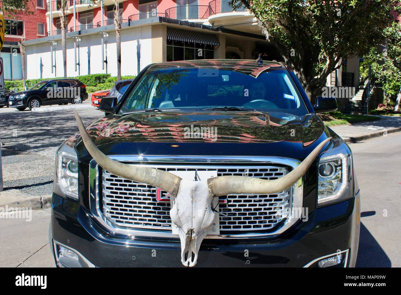 longhorn cow skull adornment on the front grill of a GMC black car in houston texas USA - Stock Image