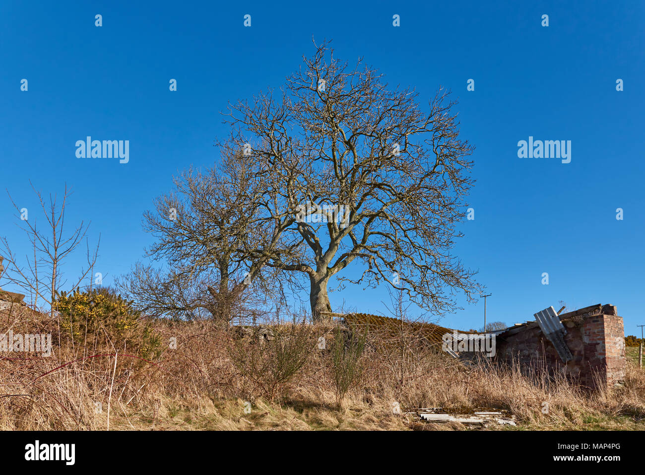Old Derelict Rural Farm Cottage Stock Photos Amp Old