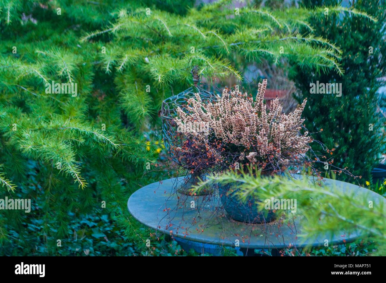 Photo of  old marble table and pot,taken in garden- Stock Photo