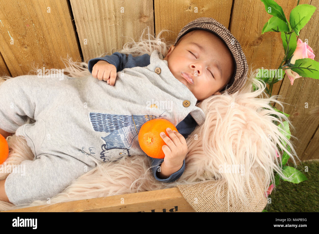 10 week old ethnic baby boy sleeping in fruit box - Stock Image