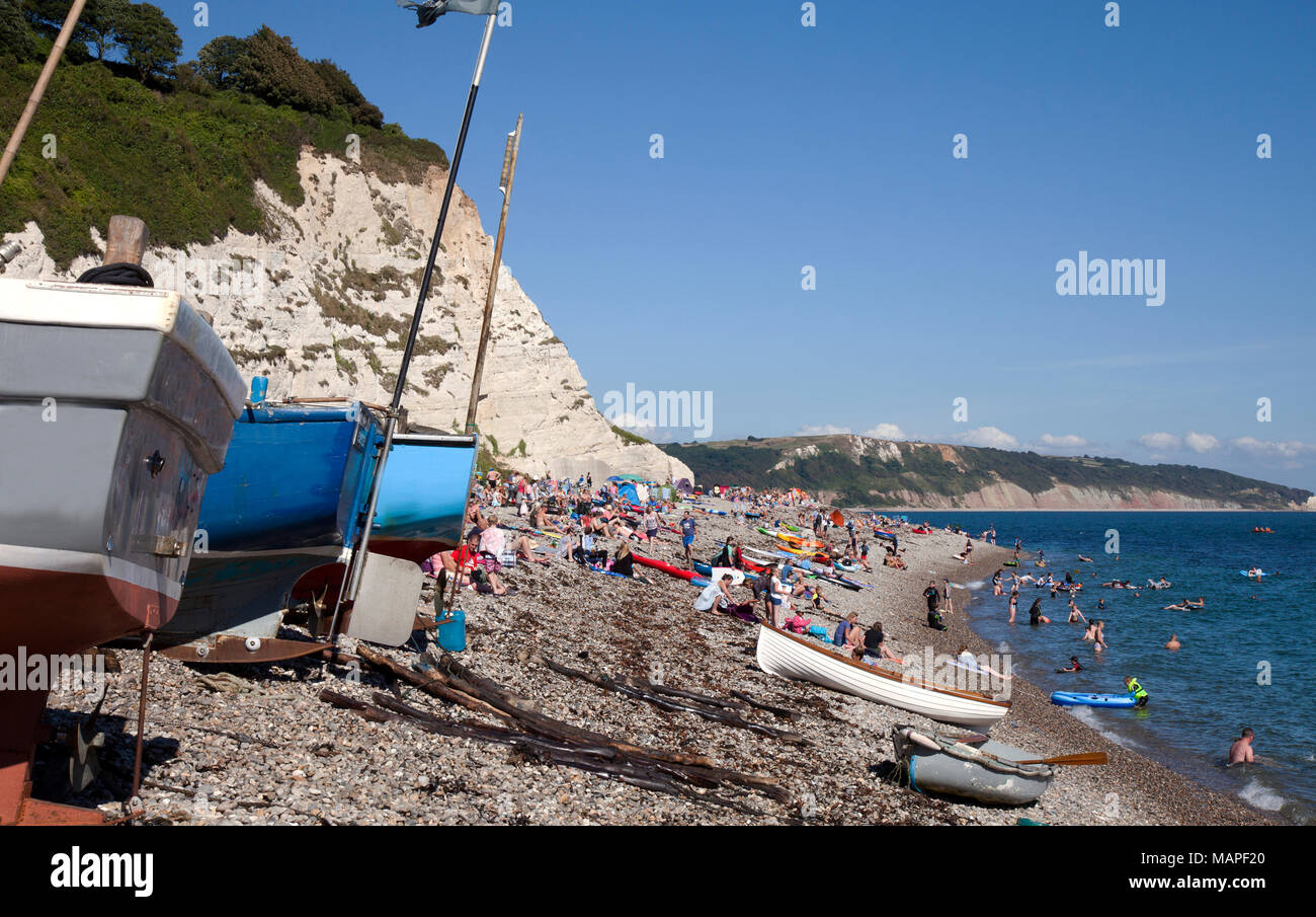 Flanked by towering white (chalk) cliffs, the beach at village of Beer on England's East Devon coast attracts droves of oleasure boats and sunbathers. - Stock Image