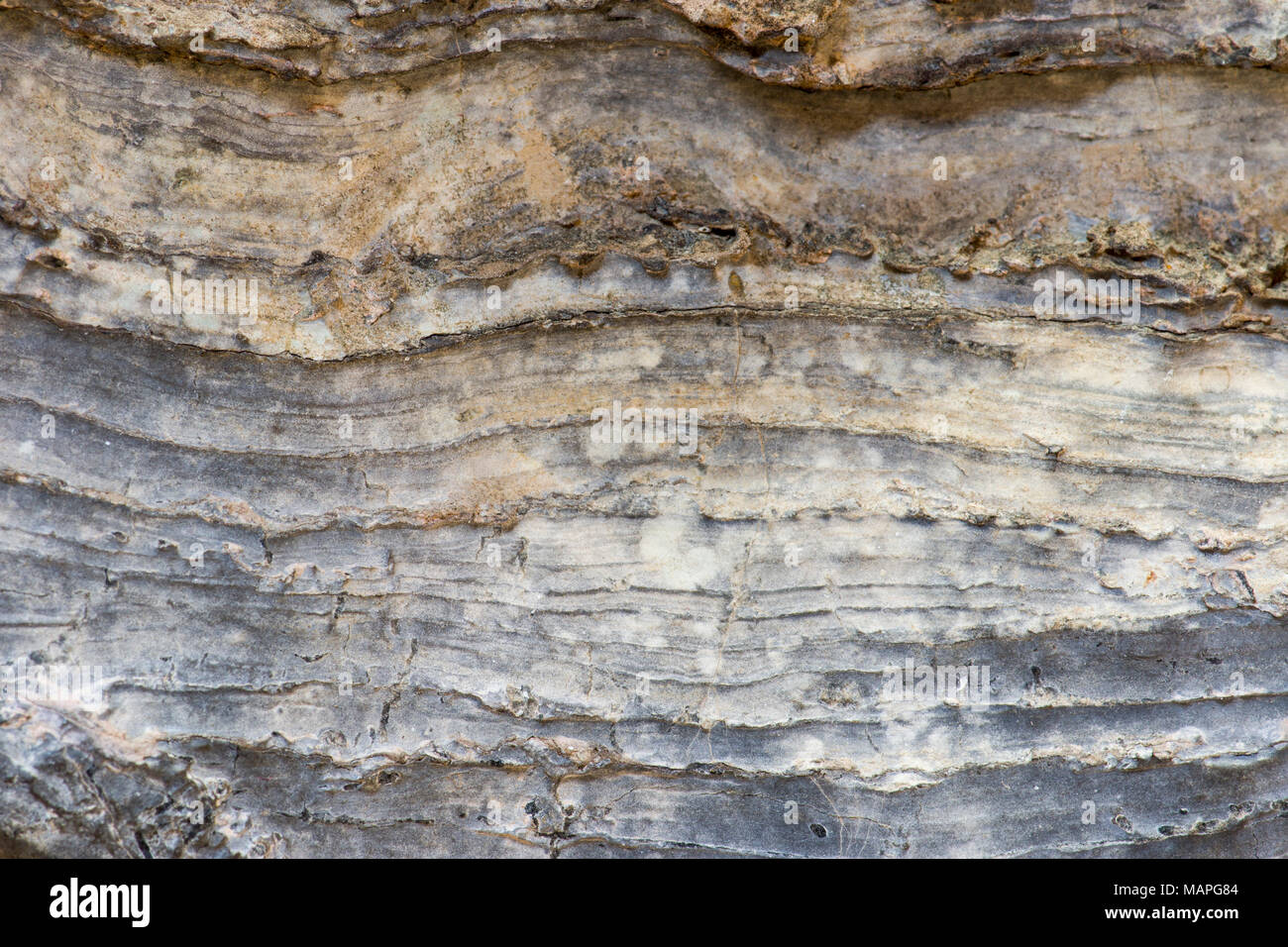 Close up of stromatolite layering (fossilized microbes from the late Precambrian or early Cambrian periods) - Stock Image