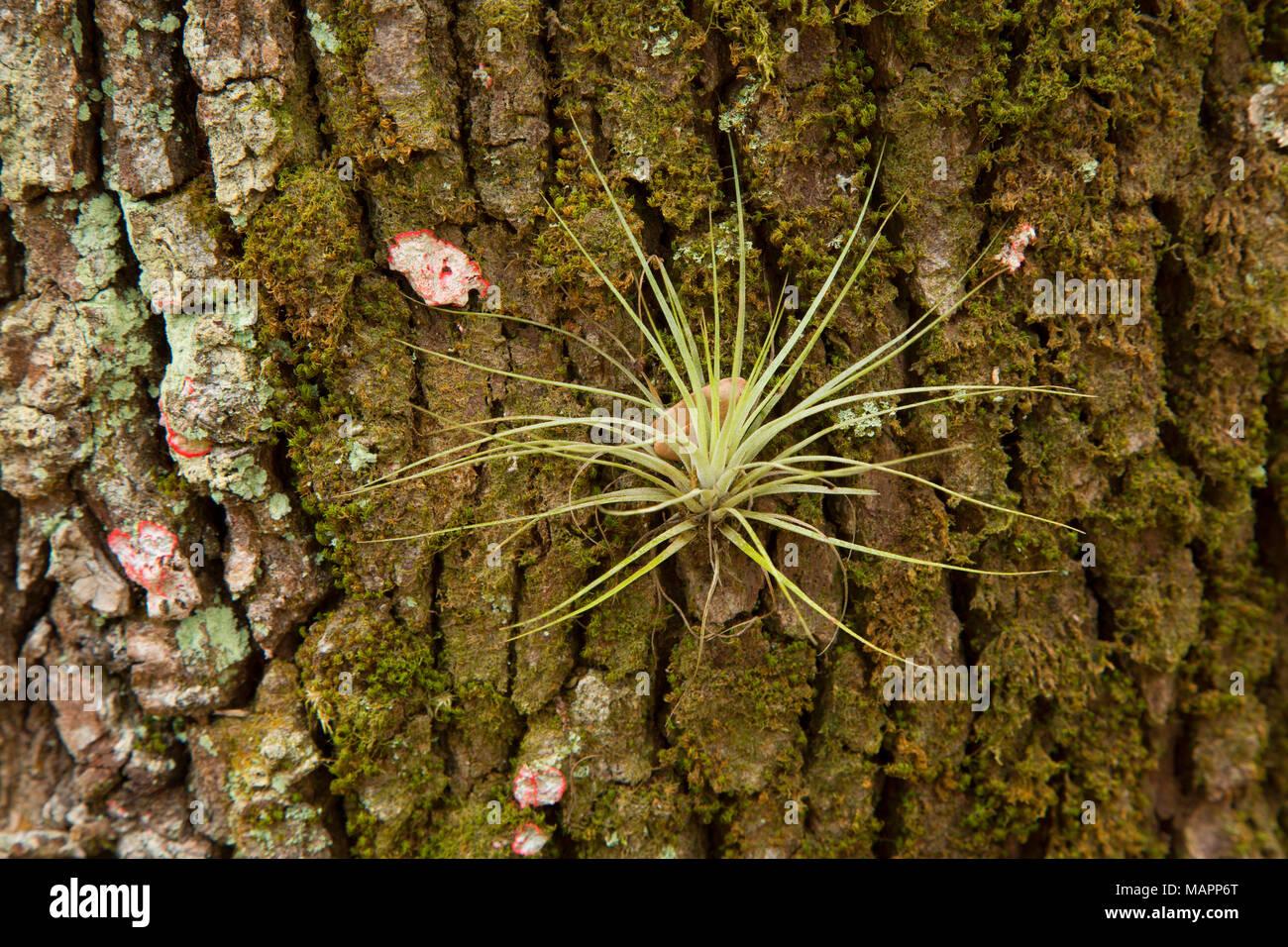 Epiphyte Enchanted Forest Sanctuary Florida