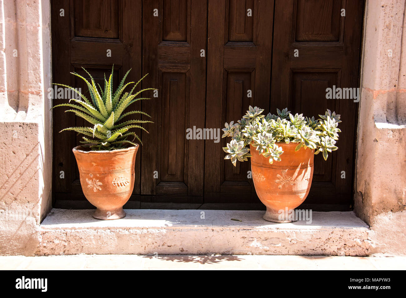Two pots with succulents in the front of someones home on a street in the city of Aguascalientes, Mexico. - Stock Image