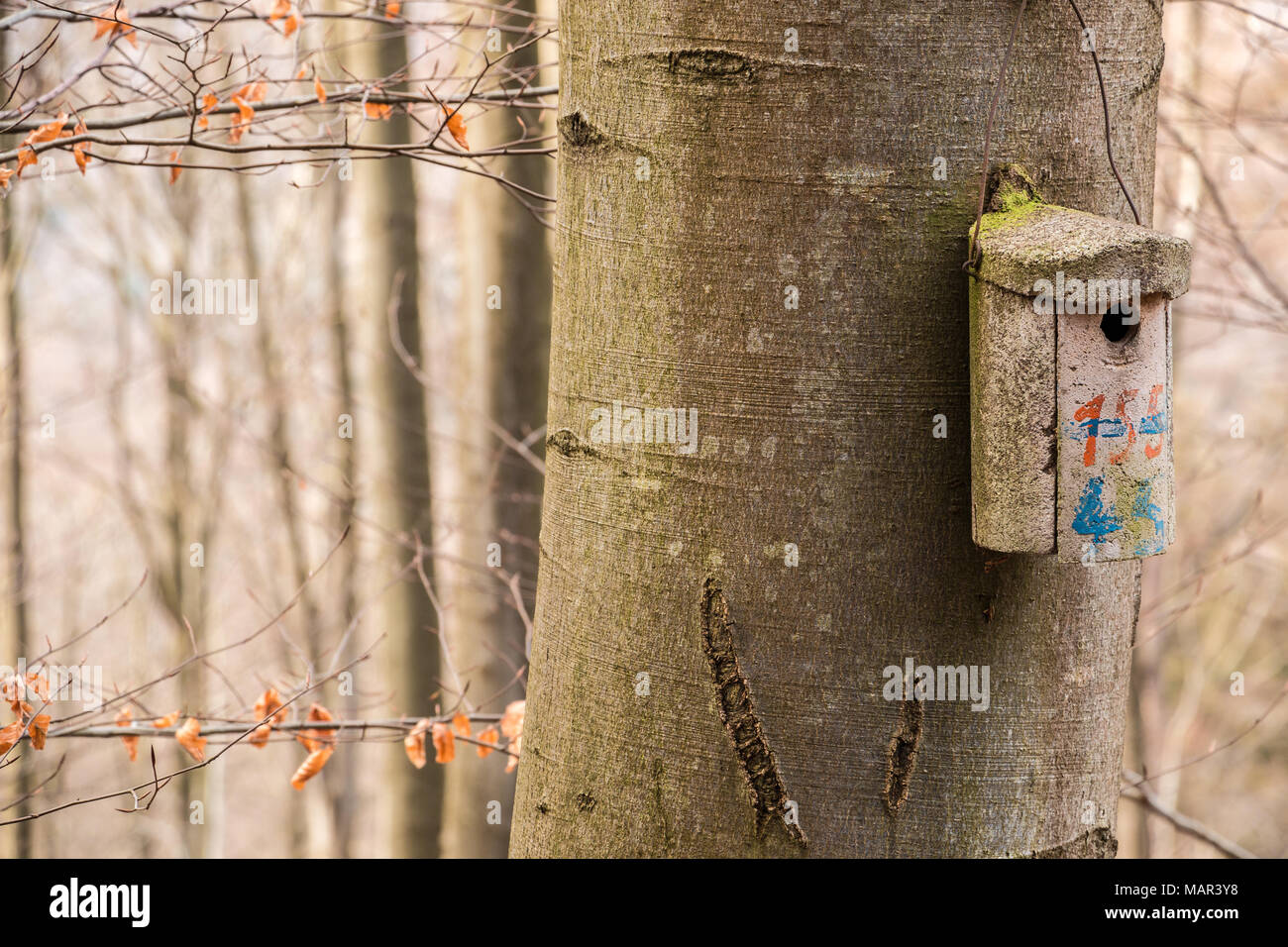 Little bird table on a big old tree Stock Photo