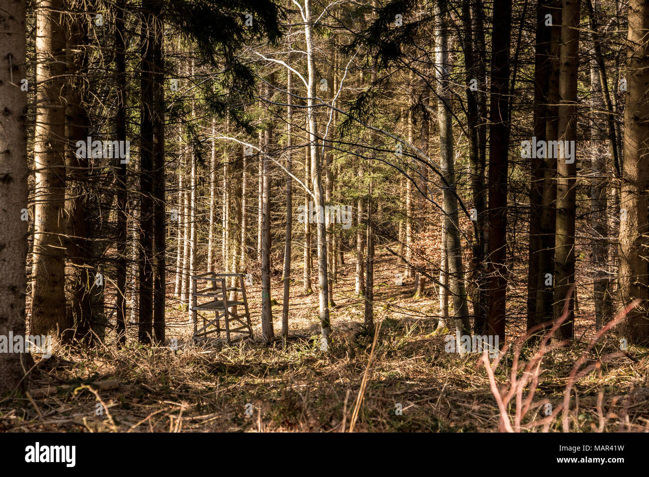 Raised hide in the middle of the forest - Stock Image