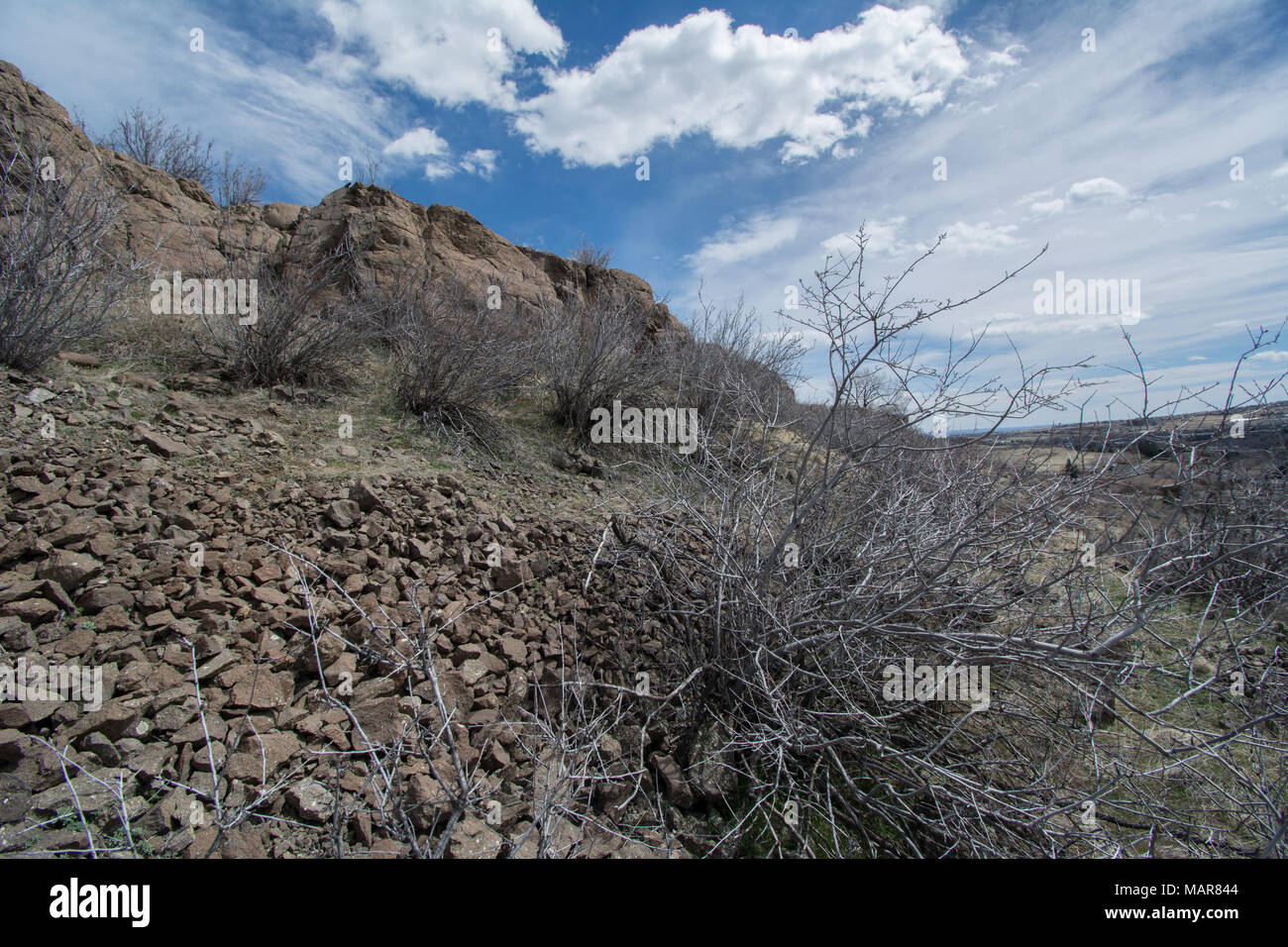 Rocky Mountain Lower Montane-Foothill Shrubland habitat on South Table Mountain Park in Jefferson County, Colorado, USA. - Stock Image