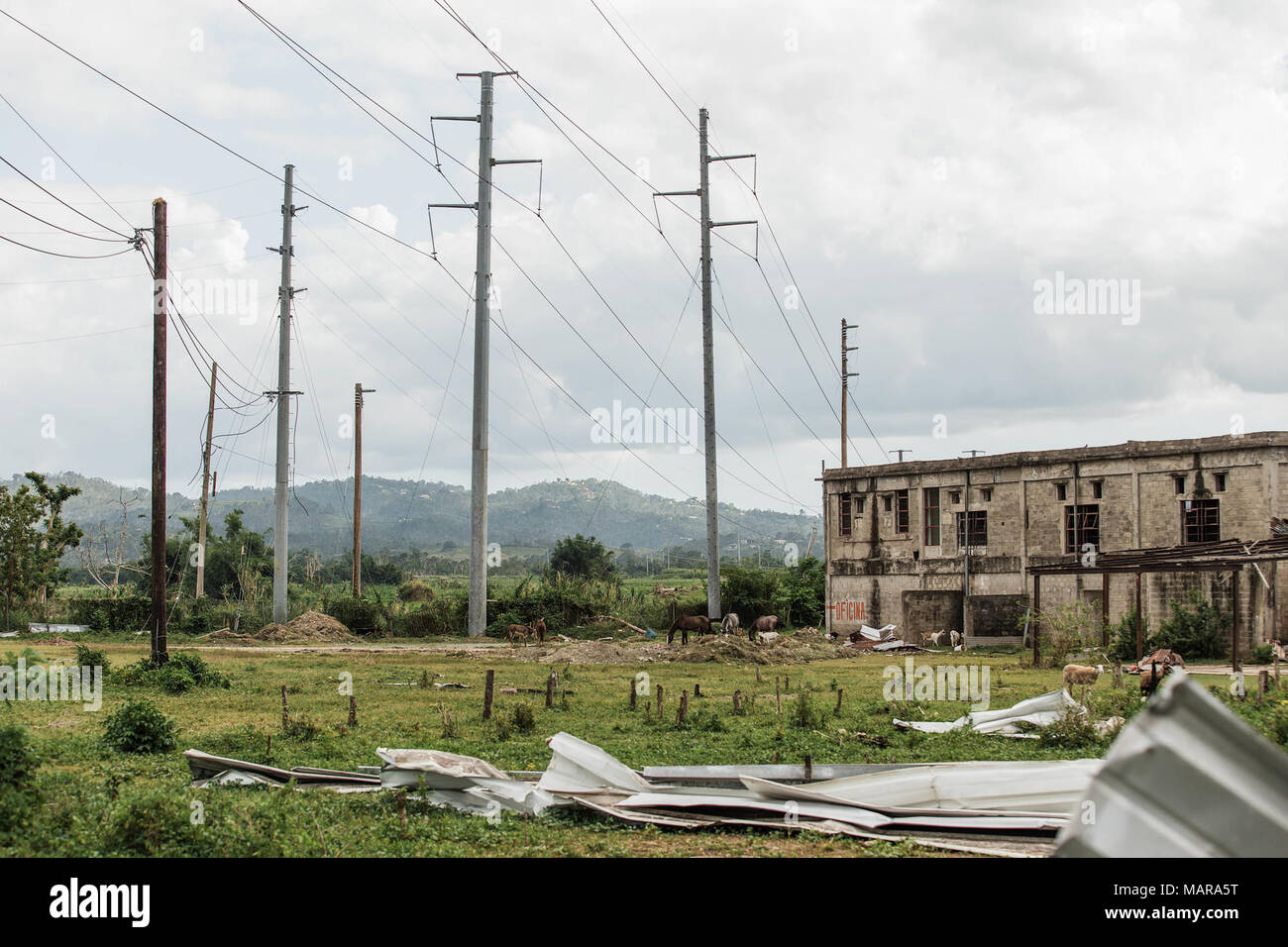 Mayaguez, Puerto Rico, Dec. 8, 2017--Contractors installed wood and aluminum poles to help restore electricity in Mayaguez. As assigned by FEMA, USACE leads the federal effort to repair the electrical power network damaged by the hurricanes, with support from the Government of Puerto Rico. FEMA/Eduardo Martinez - Stock Image