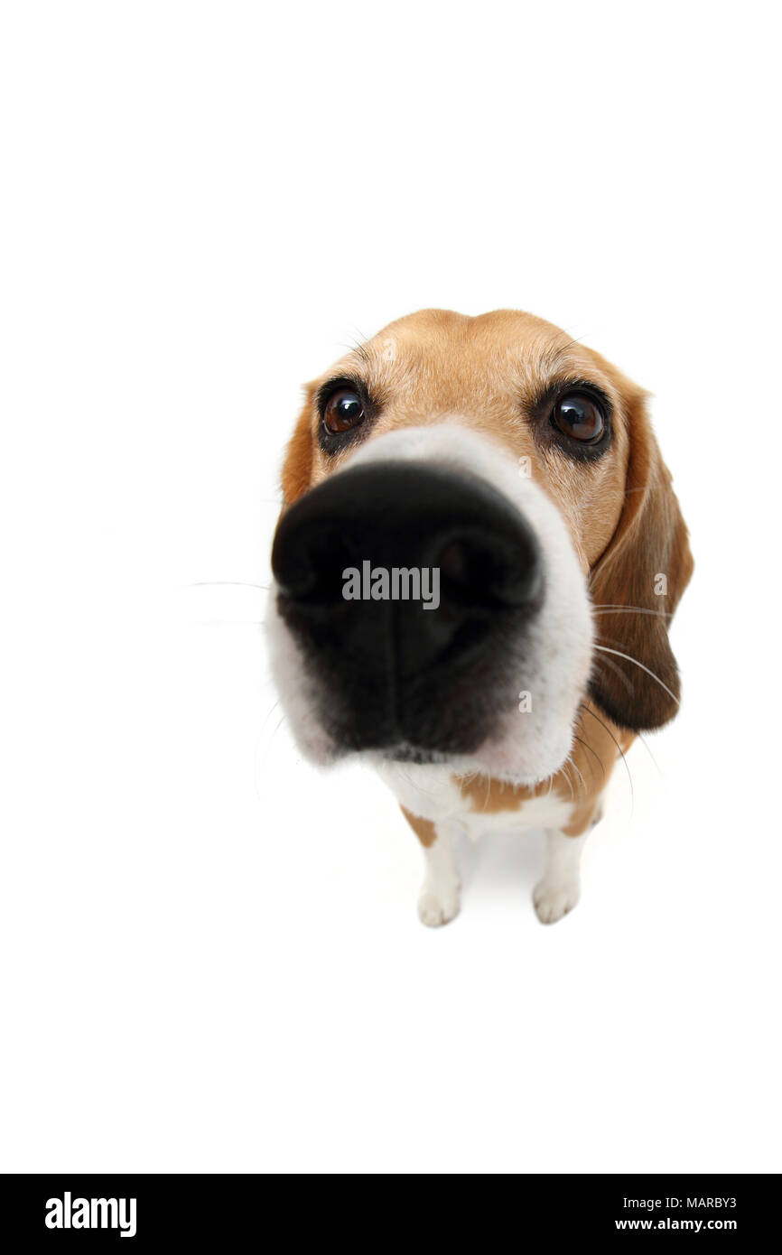Canidae Cut Out Stock Images & Pictures - Alamy