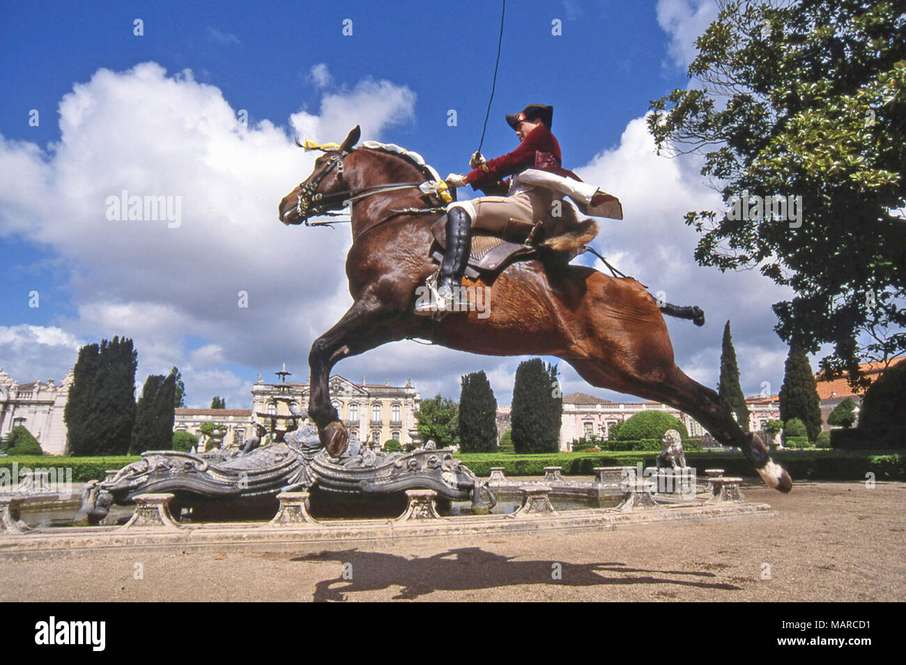 Alter Real. Bay adult with rider performing a capriole. Portugal - Stock Image