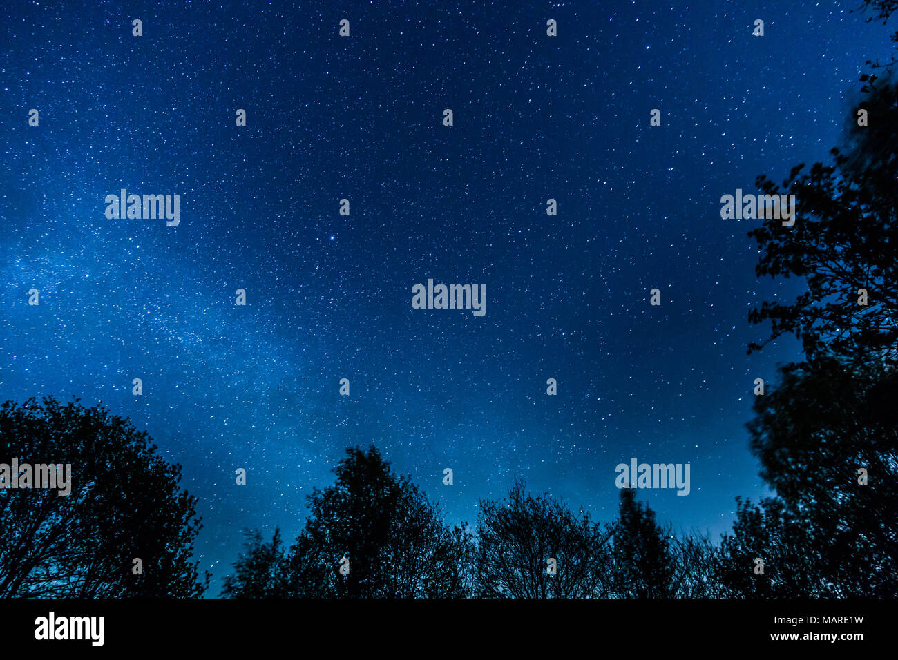 trees milkyway stars space astro - Stock Image