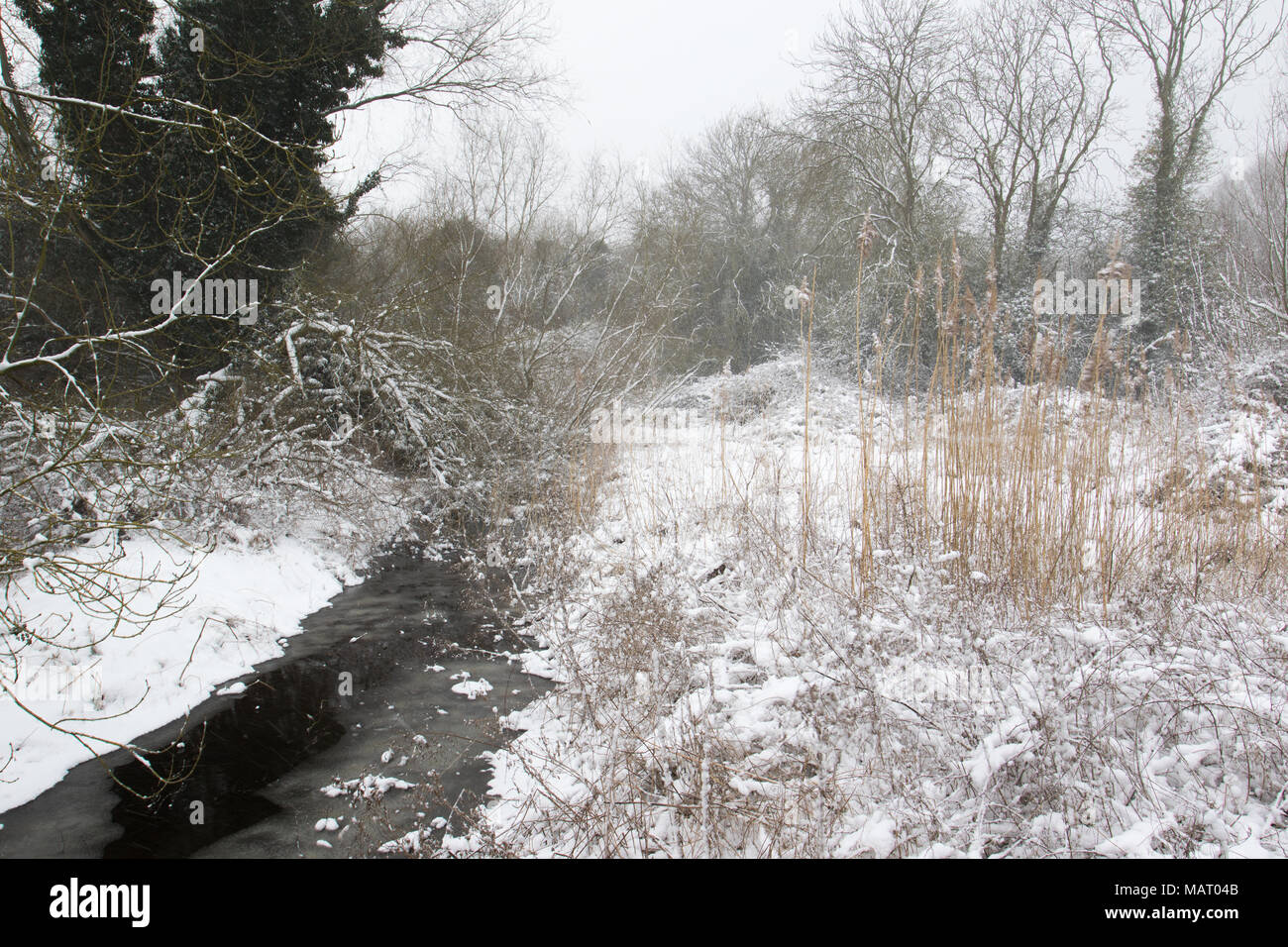 Snow-covered frozen stream in a woodland clearing at Attenborough Nature Reserve, Nottinghamshire - Stock Image