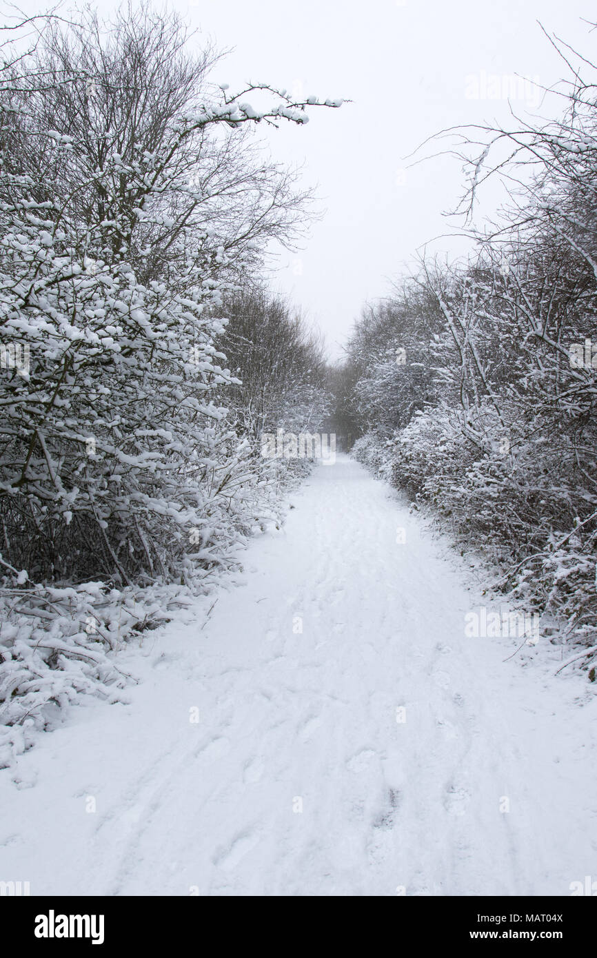 Path through a deciduous woodland after a heavy snowfall, Attenborough Nature Reserve, Nottinghamshire, Uk - Stock Image