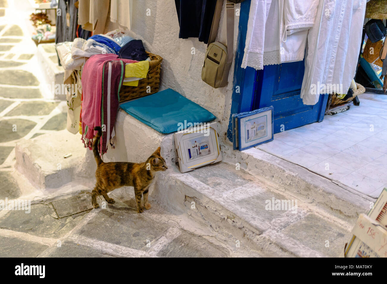 A kitten looking into a shop in Ios town - Stock Image