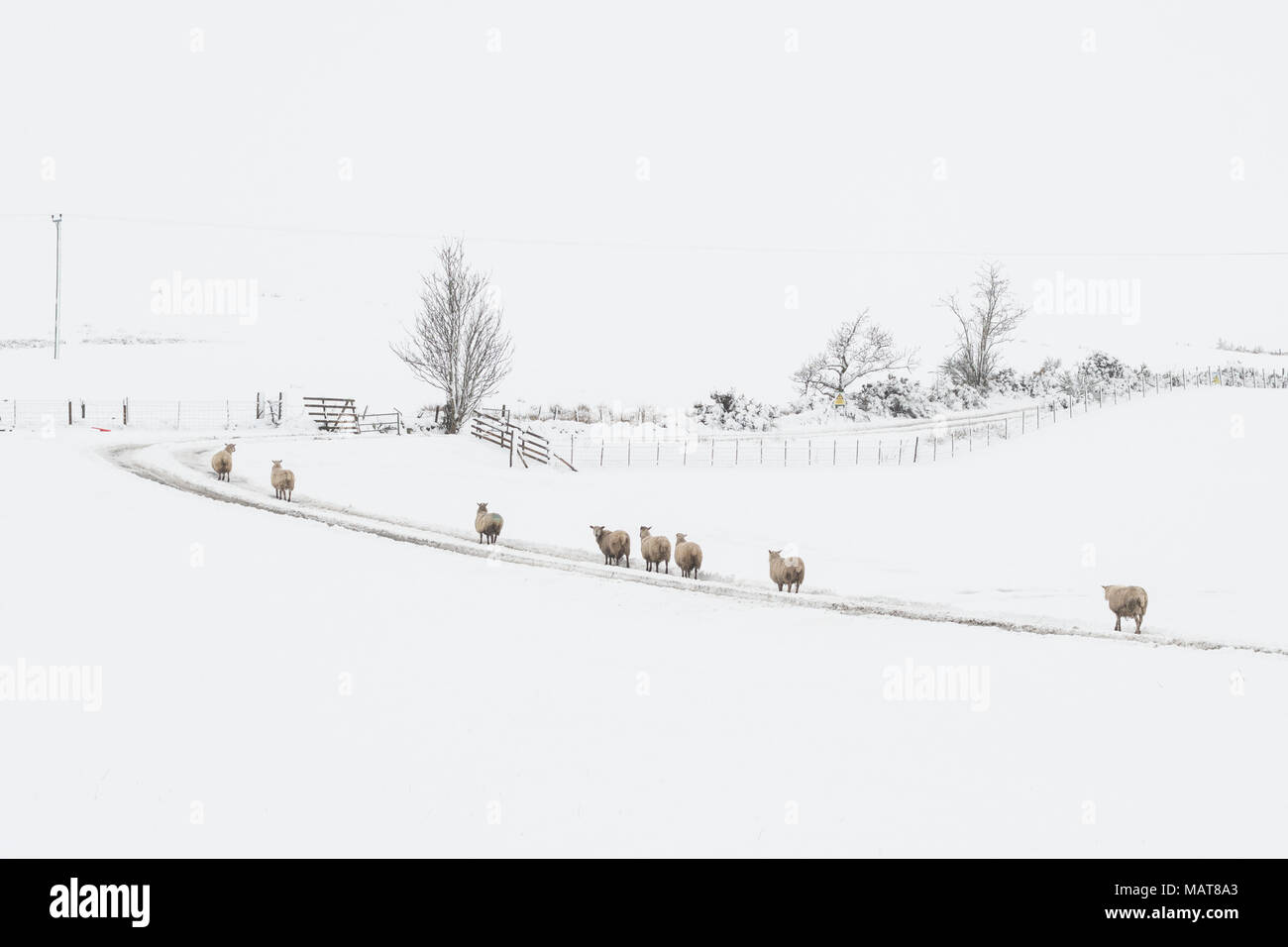 Stirlingshire, Scotland, UK - 4 April 2018: UK weather - it's not feeling like spring in Stirlingshire this morning Credit: Kay Roxby/Alamy Live News - Stock Image