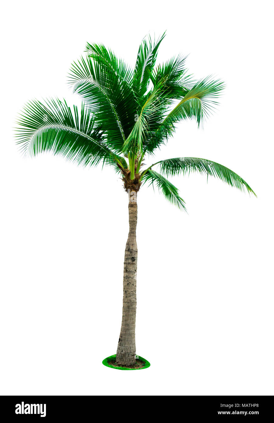Coconut Palm Tree Cut Out Stock Images & Pictures - Alamy