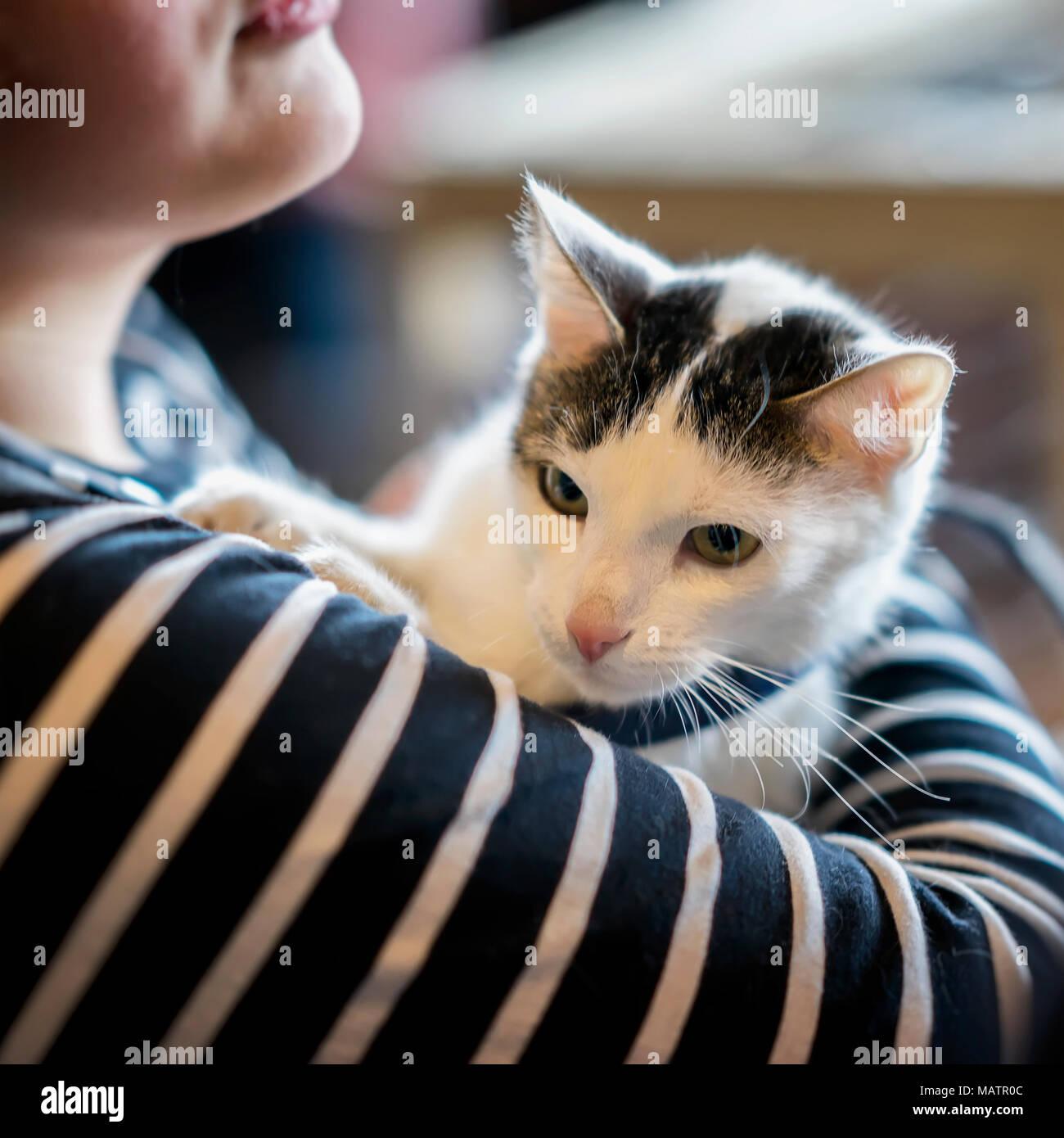 Frightened kitten in hands of girl volunteer, in shelter for homeless animals. Kitten will have home, girl takes cat to her home - Stock Image