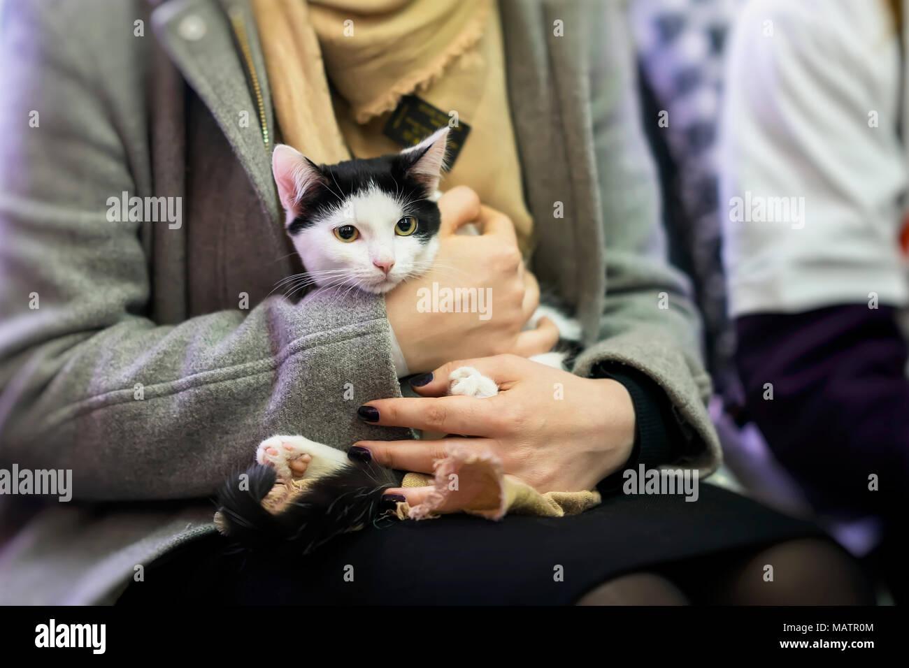 Frightened black and white kitten in hands of girl volunteer, in shelter for homeless animals. Girl takes cat to her home. - Stock Image