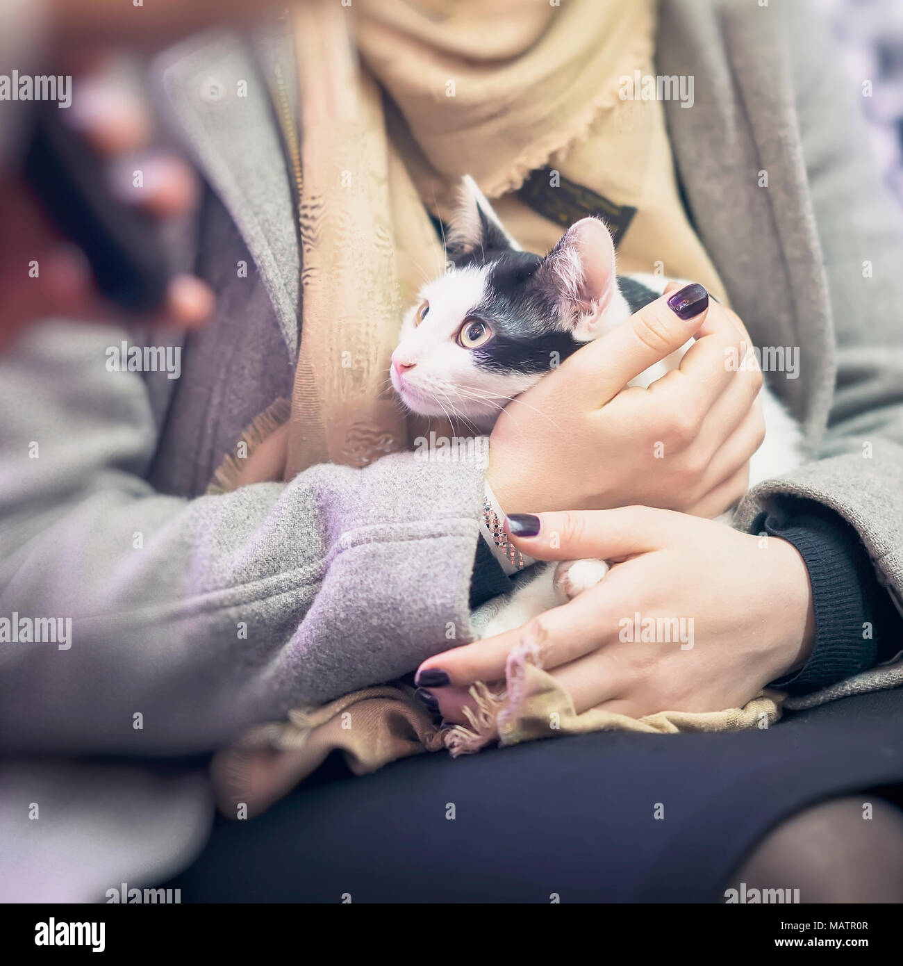 Frightened kitten in the hands of girl volunteer, in shelter for homeless animals. Girl takes cat to her home. Square - Stock Image