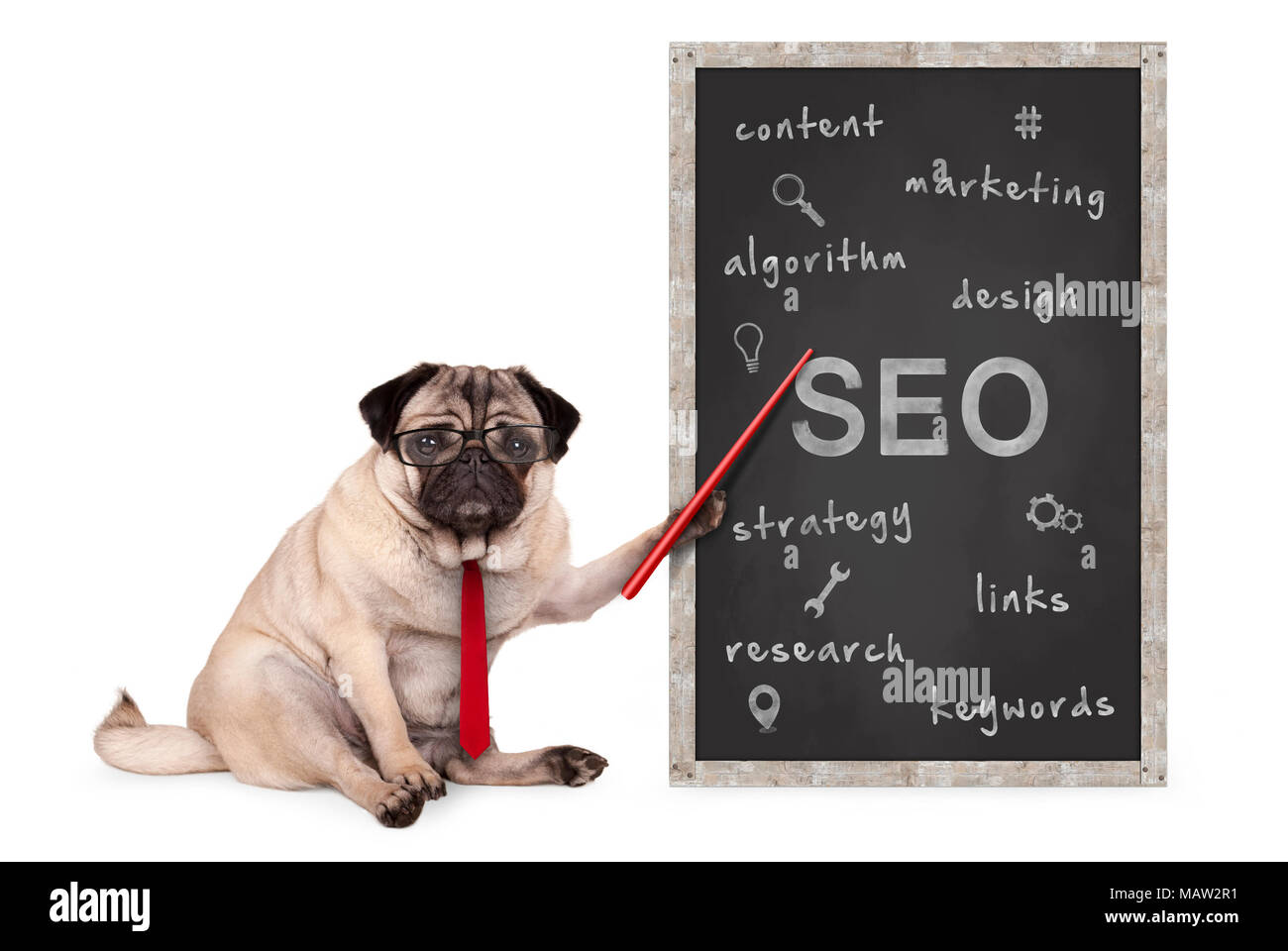 business pug dog holding red pointer, pointing out  search engine optimization, SEO, performance strategy, hand drawn on chalkboard, isolated on whiteStock Photo