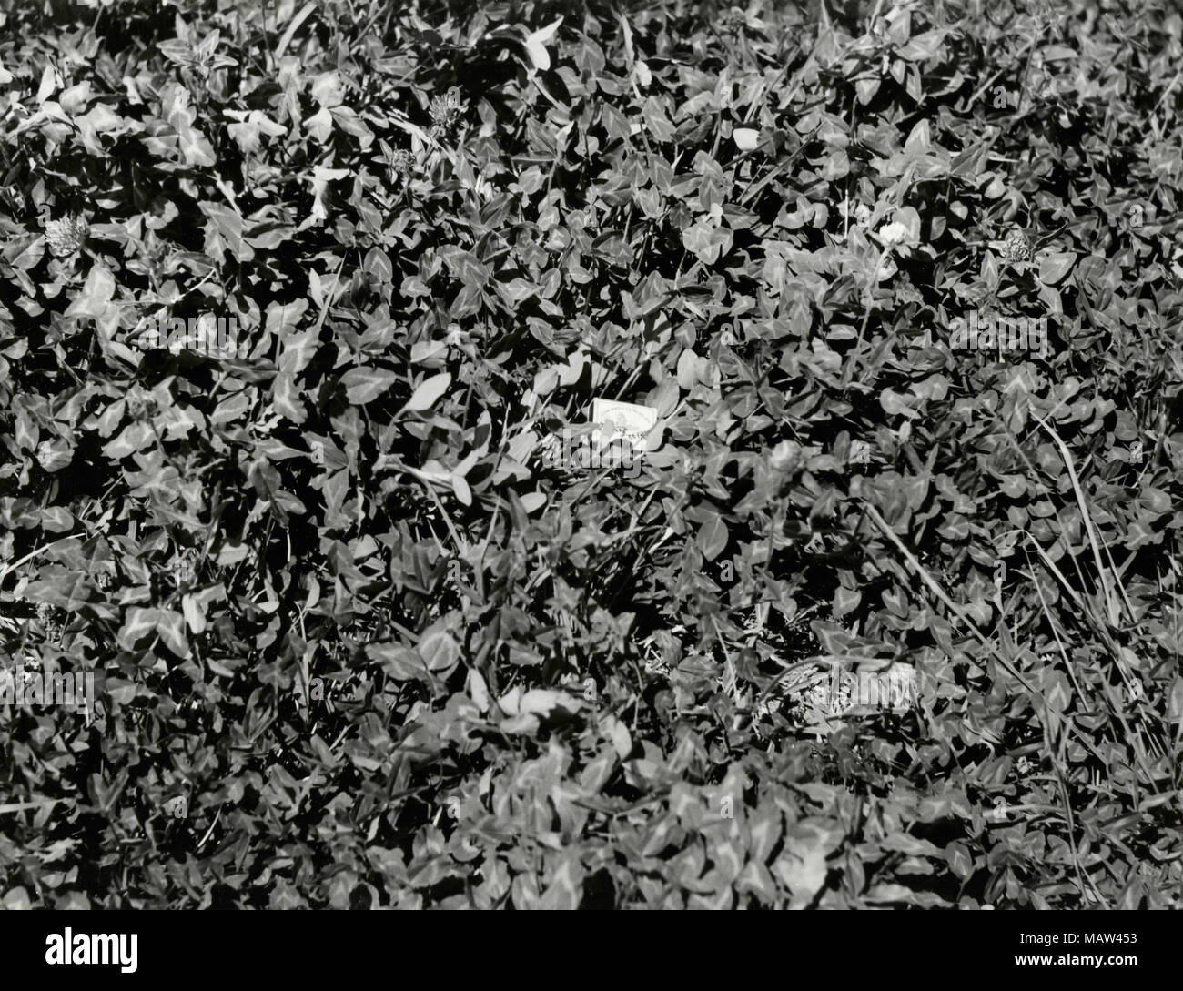 Soil in Kafue River Flats, South Rhodesia 1957 - Stock Image