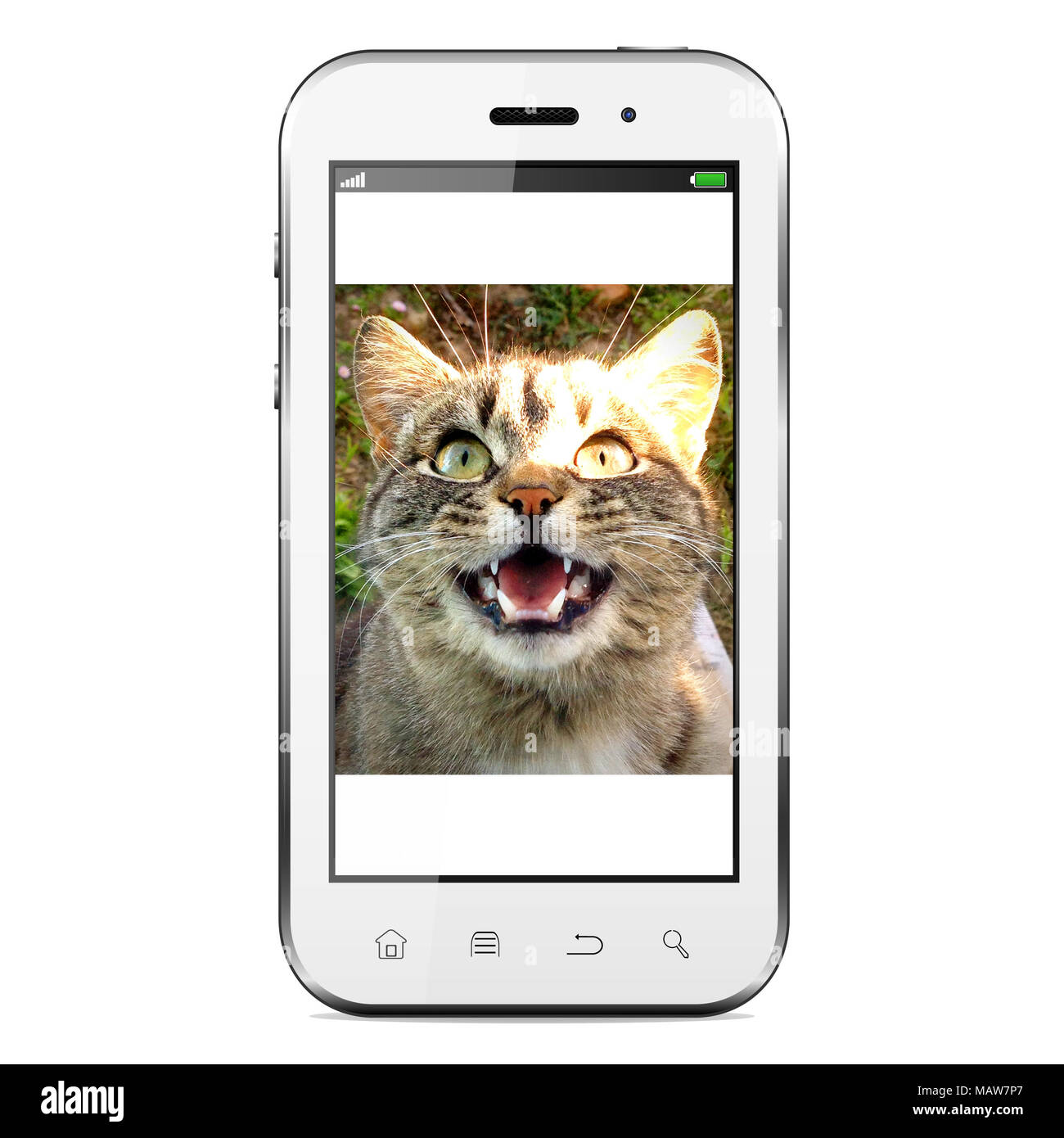 Mobile phone with cat photo on screen. Isolated on a white background. - Stock Image