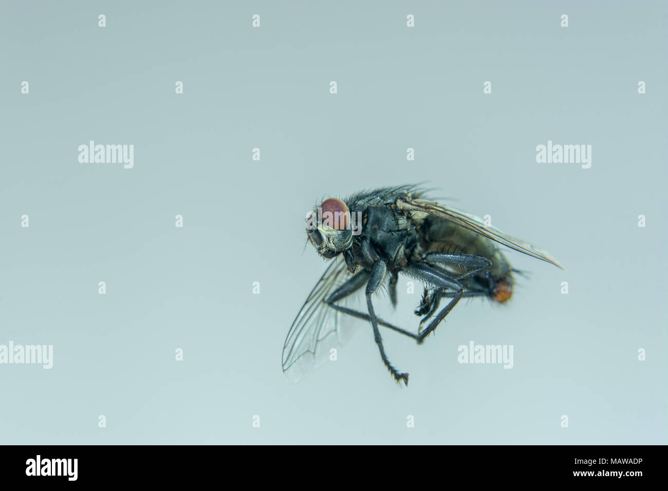 Insect Pests Stock Photos & Insect Pests Stock Images - Alamy