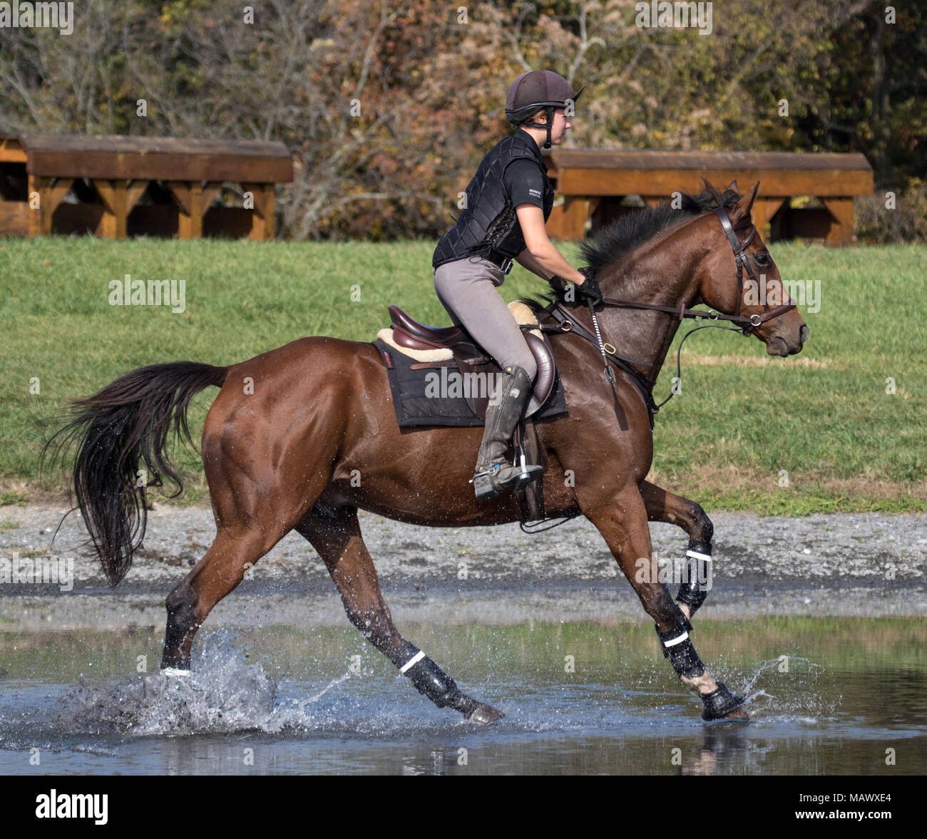 A horse and rider gallop through the water complex at Loch Moy Farm. - Stock Image