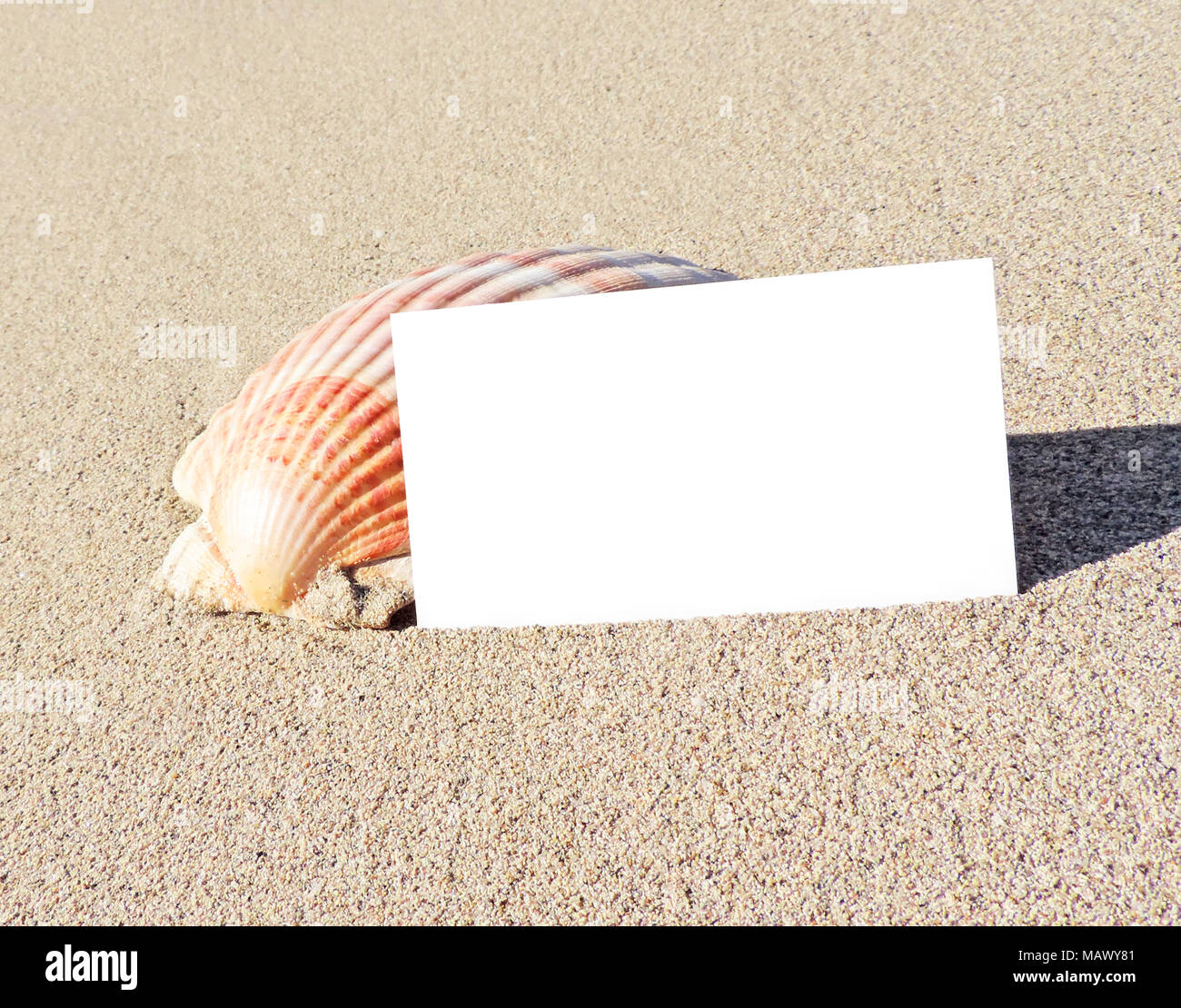 Blank white card or greeting card on the beach with copy space.  Summer holiday or beach vacation scene with shells and starfish. Holiday greetings. - Stock Image