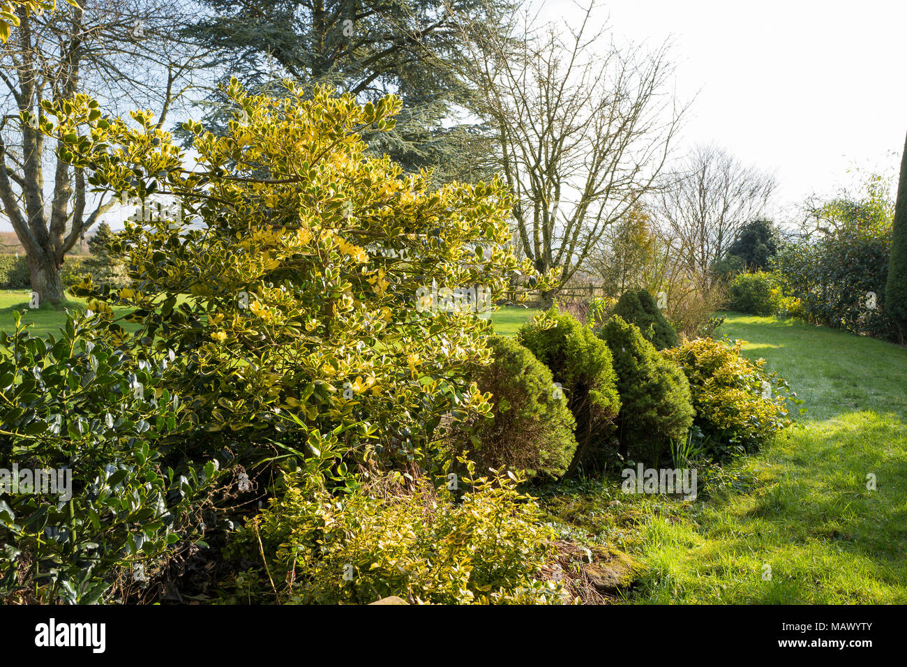A Mixed Border With Evergreen Shrubs Adding Colour To A Late