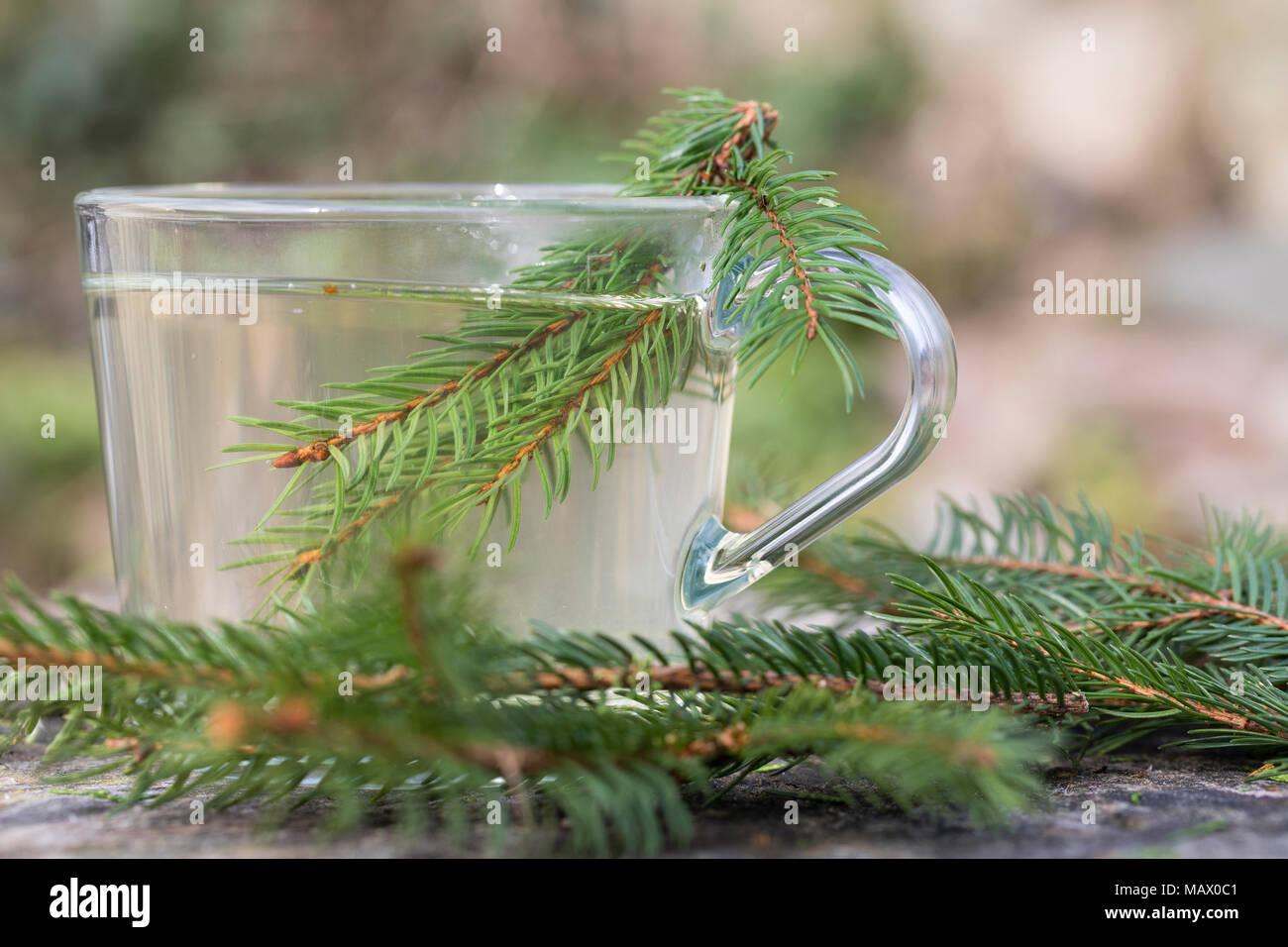 Fichtennadel-Tee, Fichtennadeltee, Fichten-Tee, Fichtentee, Tee aus Fichtennadeln, Heiltee, Kräutertee, Erkältungstee, spruce needle, spruce needles,  - Stock Image