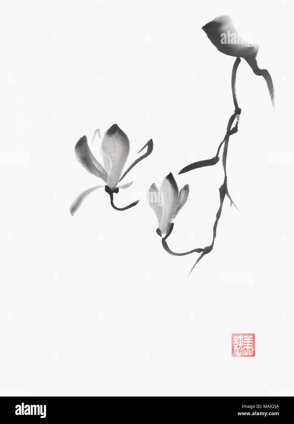 Beautiful black and white magnolia branch with two flowers artistic oriental style illustration, Japanese Zen Sumi-e black ink painting on white rice  - Stock Image