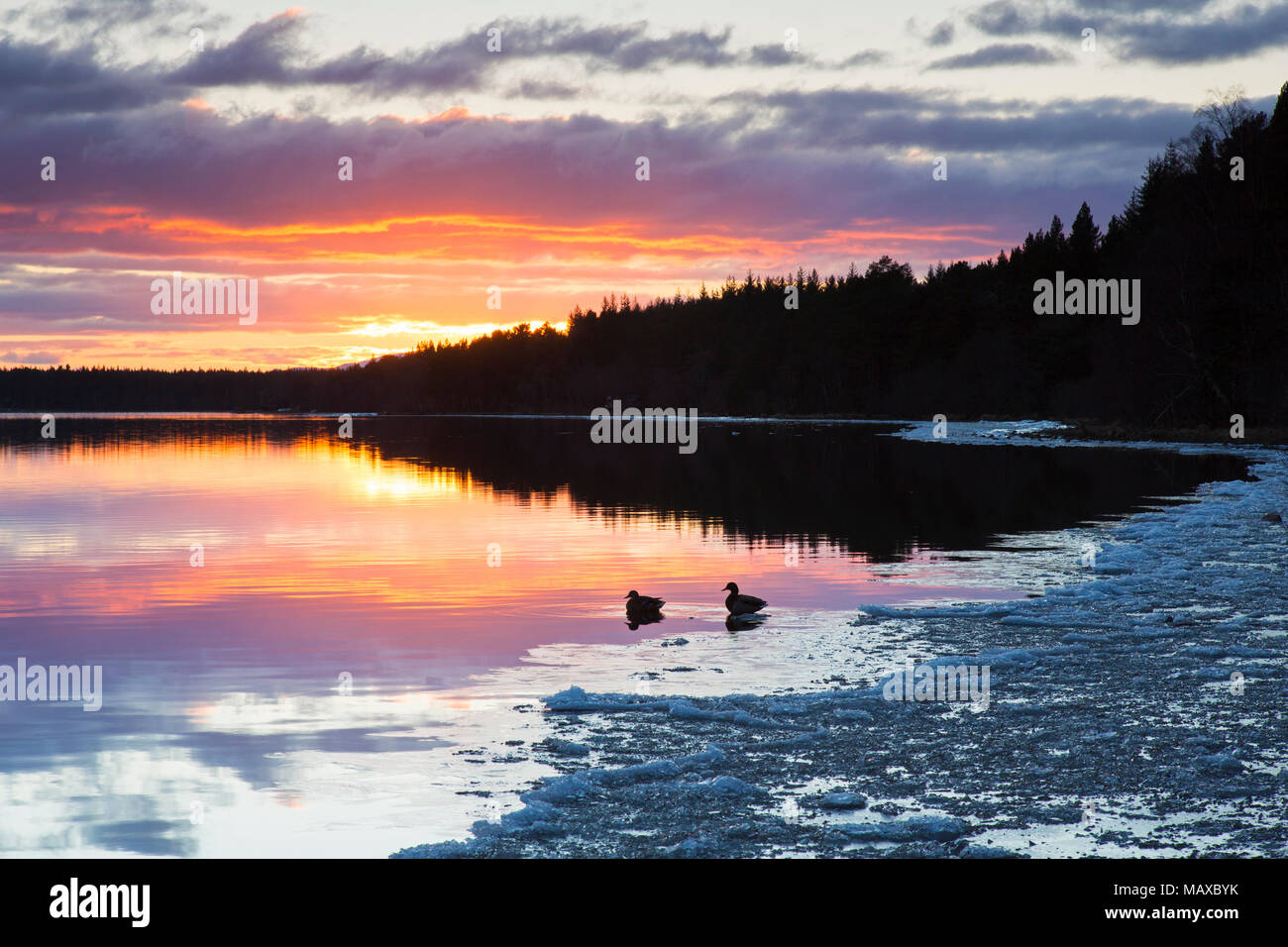 Loch Morlich at sunset in winter, Cairngorms National Park, Badenoch and Strathspey, Highland, Scotland, UK Stock Photo