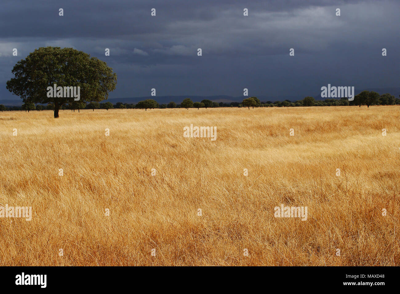 Picture taken in Cabañeros National Park, Spain - Stock Image