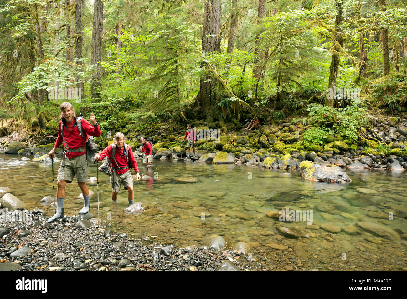 WA15023-00...WASHINGTON - Tom Kirkendall fording the North Fork of the Solduc River while following a semi-abandoned trail in Olympic National Park. - Stock Image