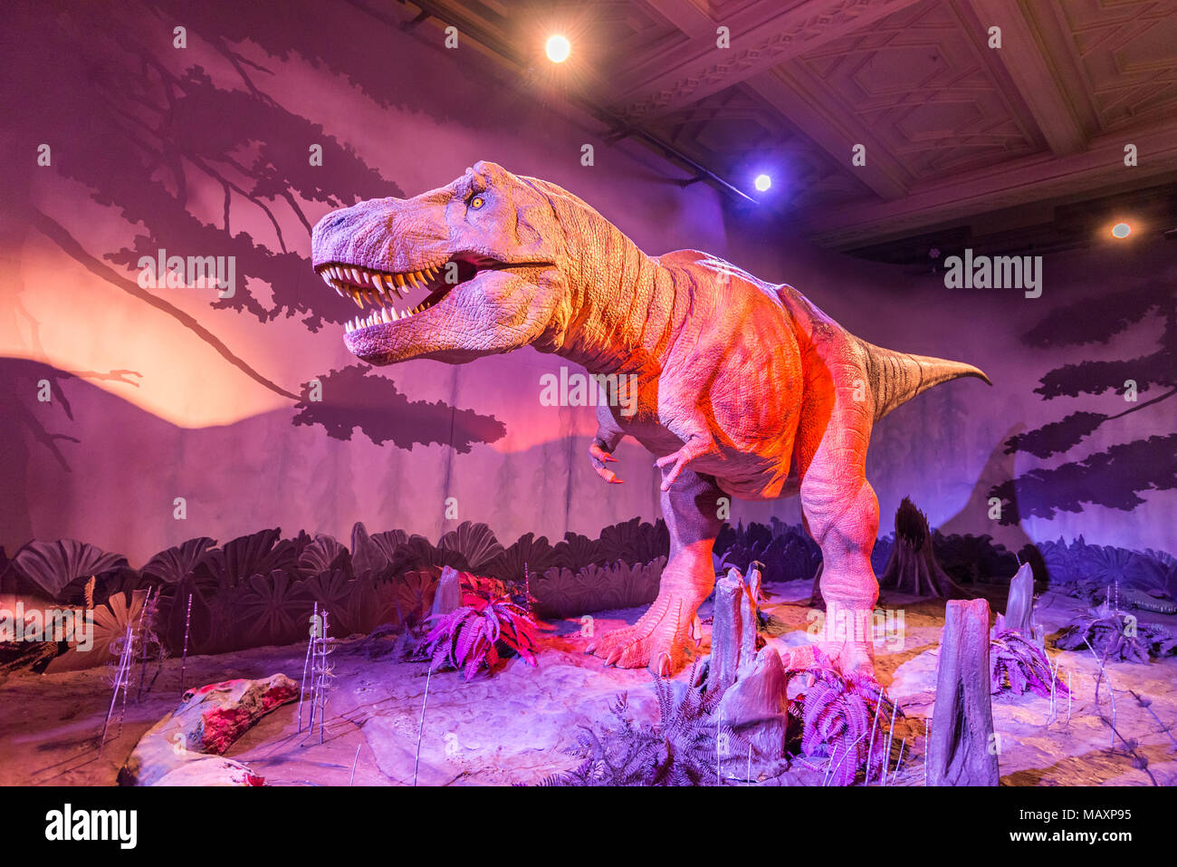 Animatronic model of a Tyrannosaurus rex dinosaur at the Natural History Museum, London, UK - Stock Image