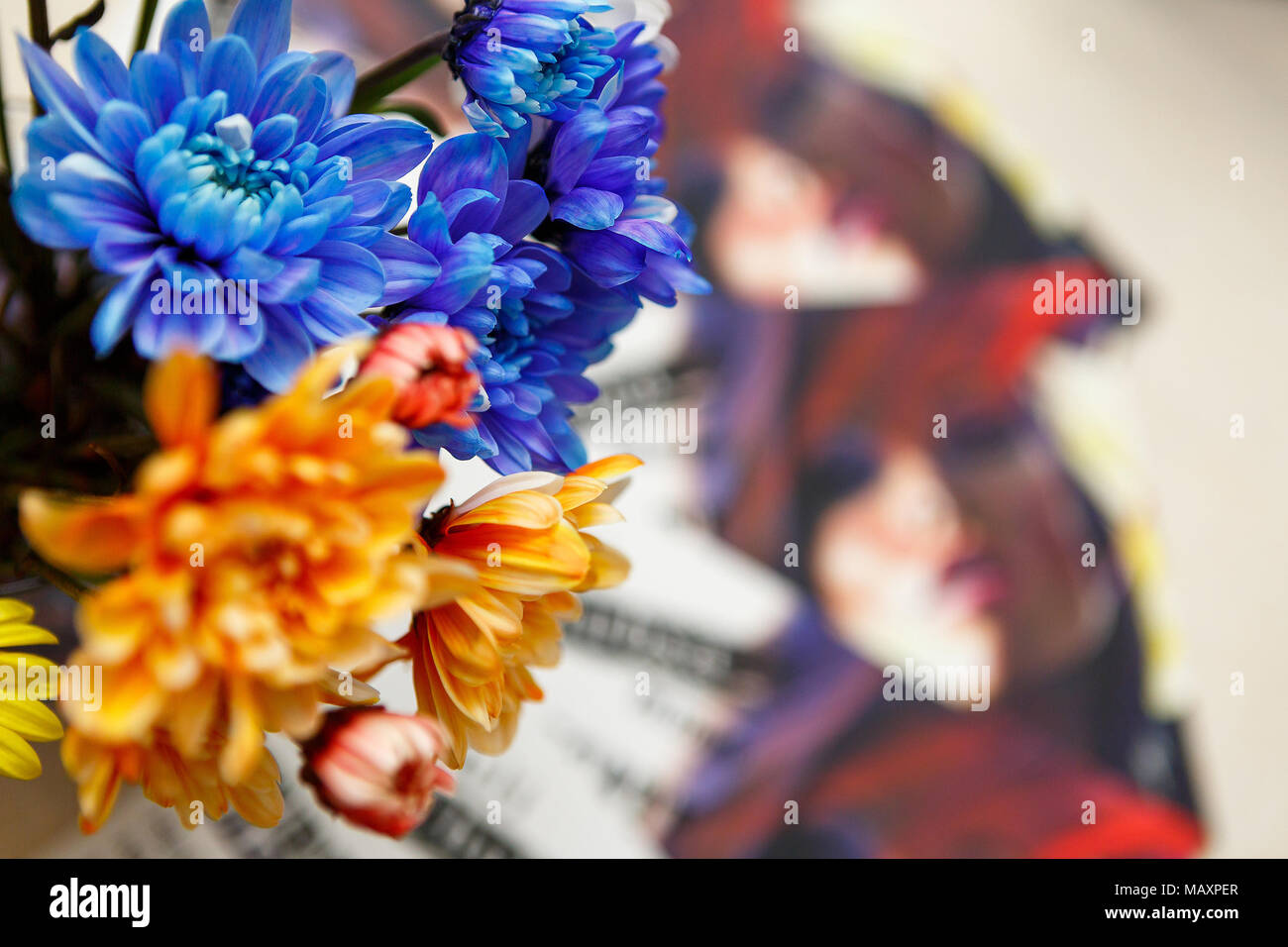 Bouquet ofblue and orange chrysanthemums - Stock Image