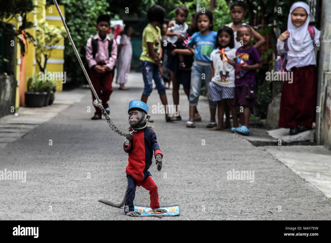 Medan, North Sumatra, Indonesia. 5th Apr, 2018. Ucil, a trained monkey, showed his action in a popular section on the street known as the ''topeng monyet'' or masked monkey on April 5, 2018 in Medan, North Sumatra. A monkey is led by his keeper to entertain a small group of people by traveling around the outskirts of the city to showcase, like a doll's head or clothing to imitate humans to act out of human activity such as praying, riding motorbikes or mimicking other human behaviors. The appeal of monkeys earns more than 200,000 IDR or 14.52 USD per day. (Credit Image: © Ivan Damanik via ZU - Stock Image