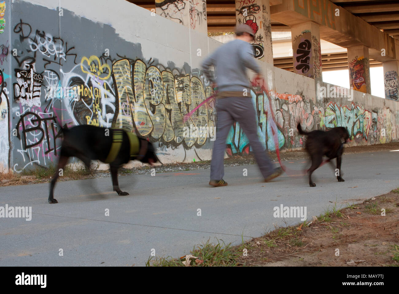Motion blur of man walking two dogs along a graffiti covered overpass that is part of the 22-mile Atlanta Beltline, on November 2, 2013 in Atlanta, GA. - Stock Image