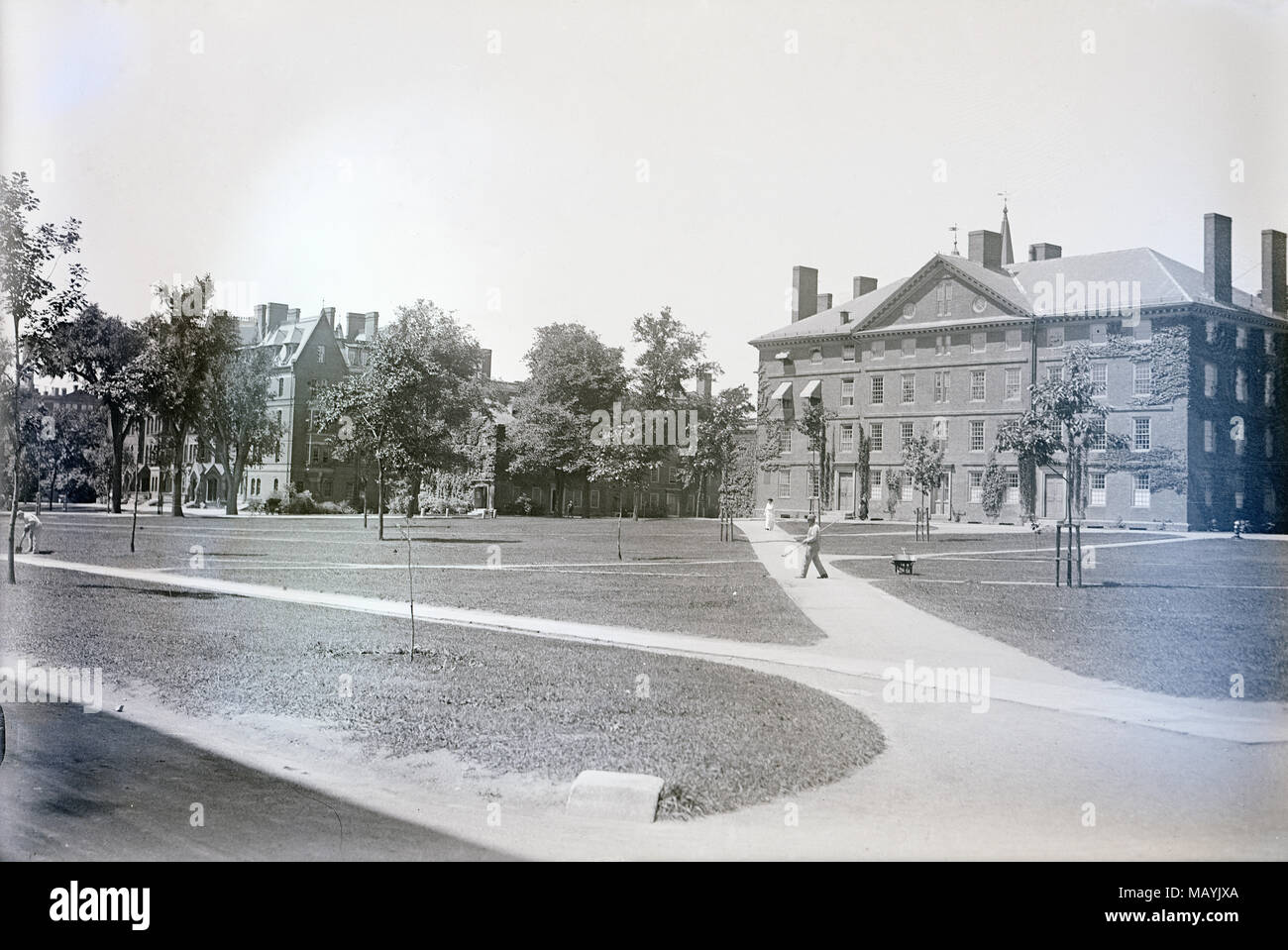 Antique c1910 photograph, Harvard Yard with buildings Matthews Hall (l), Massachusetts Hall (c) and Hollis Hall (r) in Cambridge, Massachusetts. SOURCE: ORIGINAL GLASS NEGATIVE - Stock Image